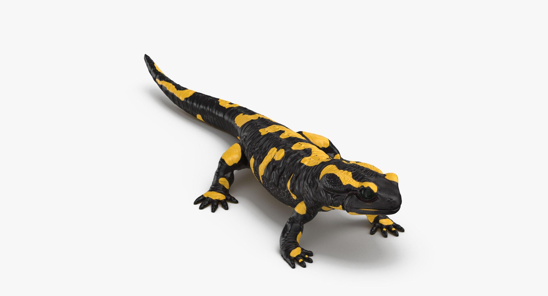 Salamander Rigged - reel 1