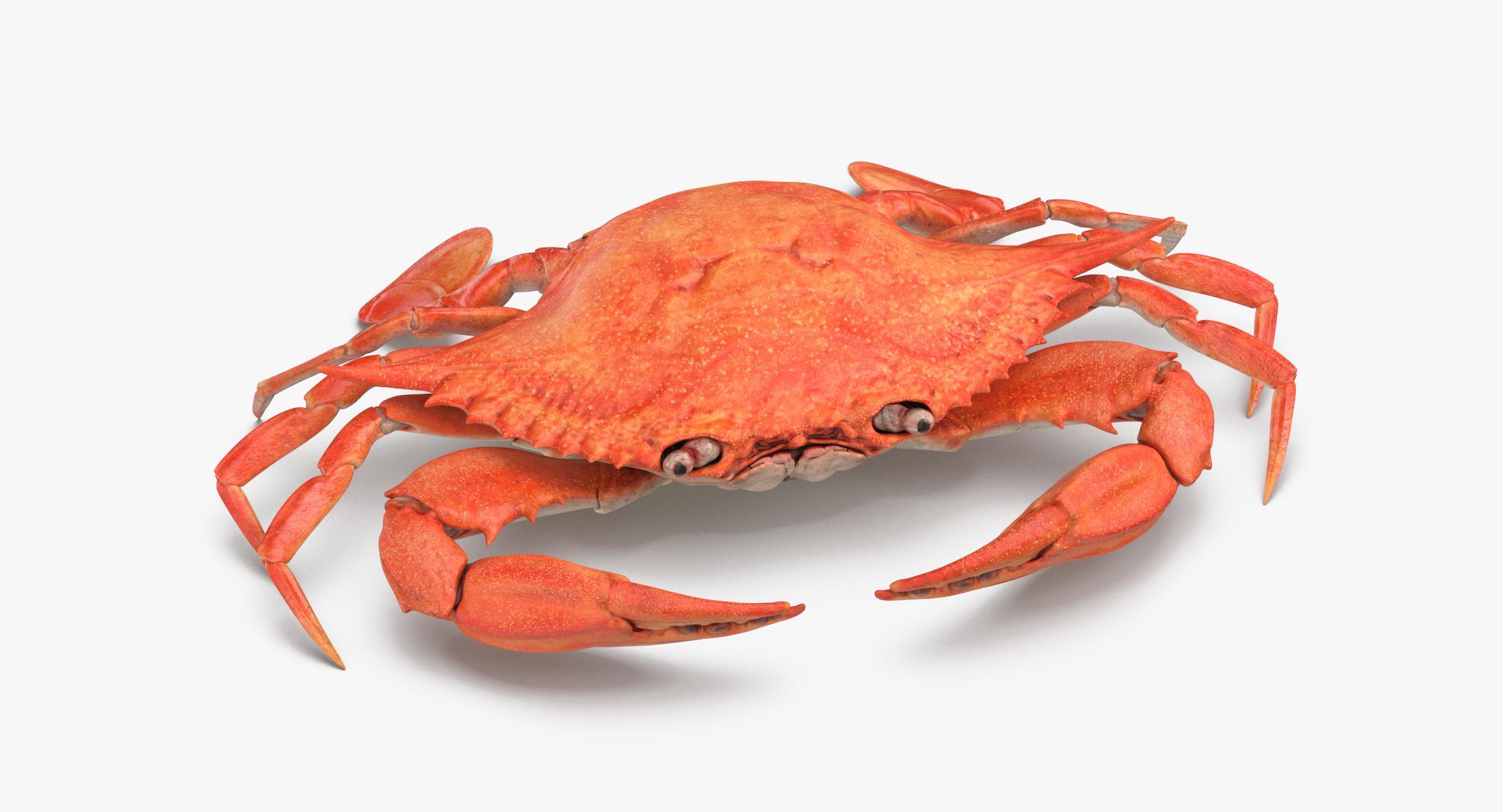 Crab - reel 1