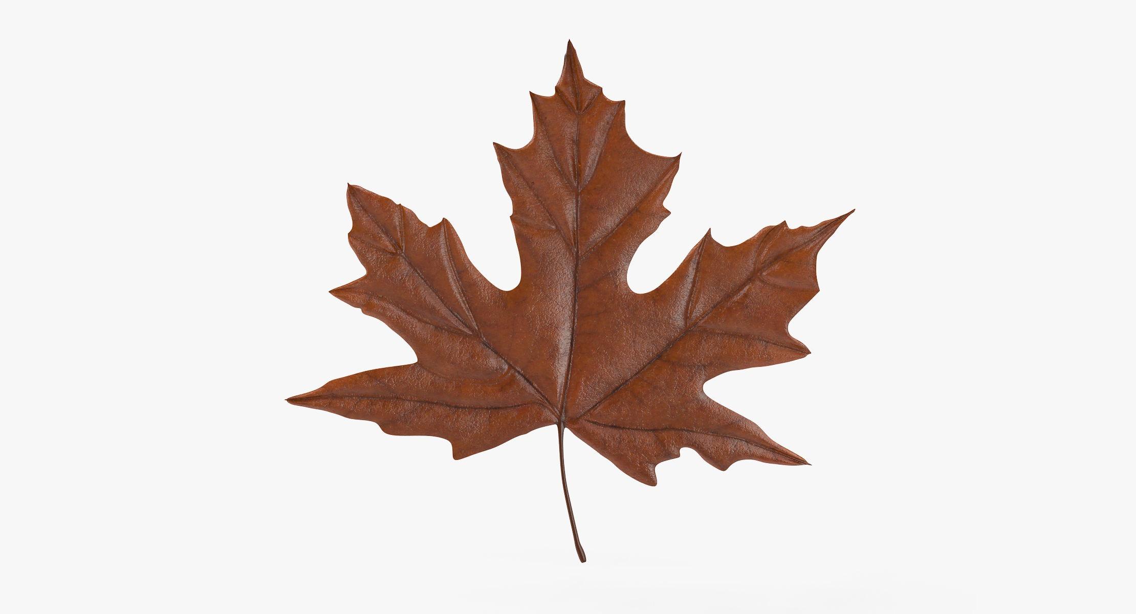 Maple Leaf 04 Orange - reel 1