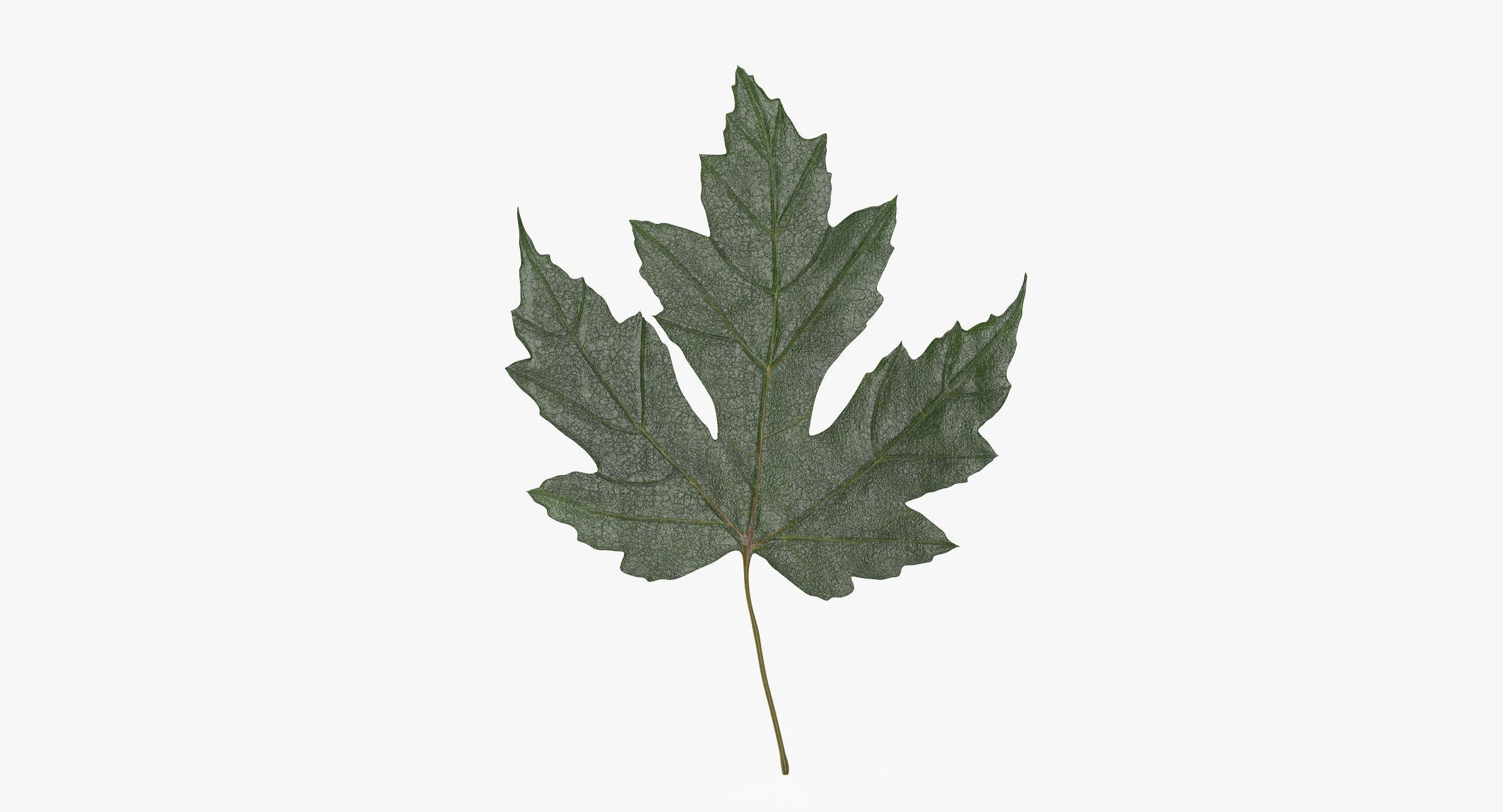 Maple Leaf 01 Green - reel 1