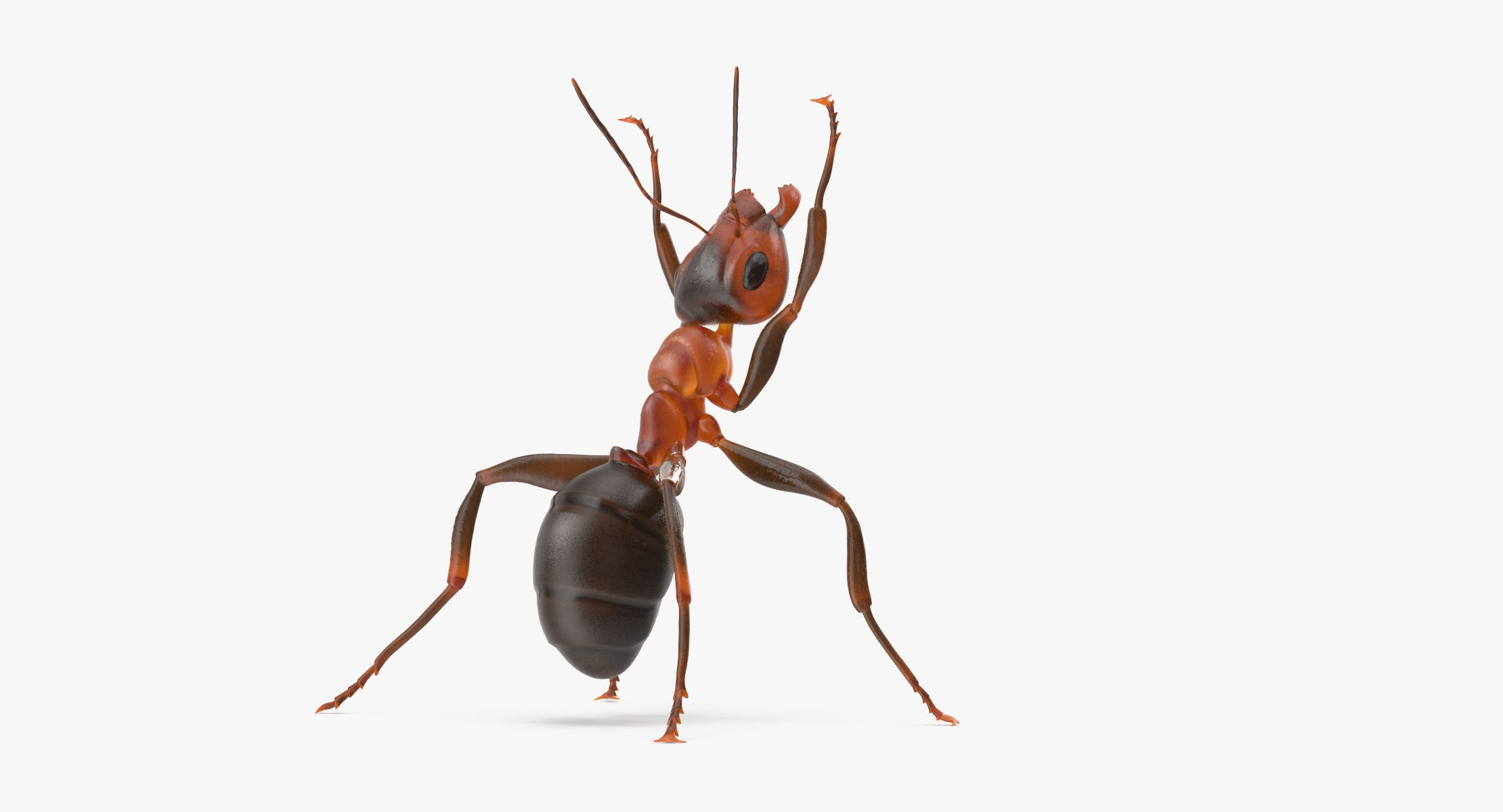 Ant Holding Pose - reel 1