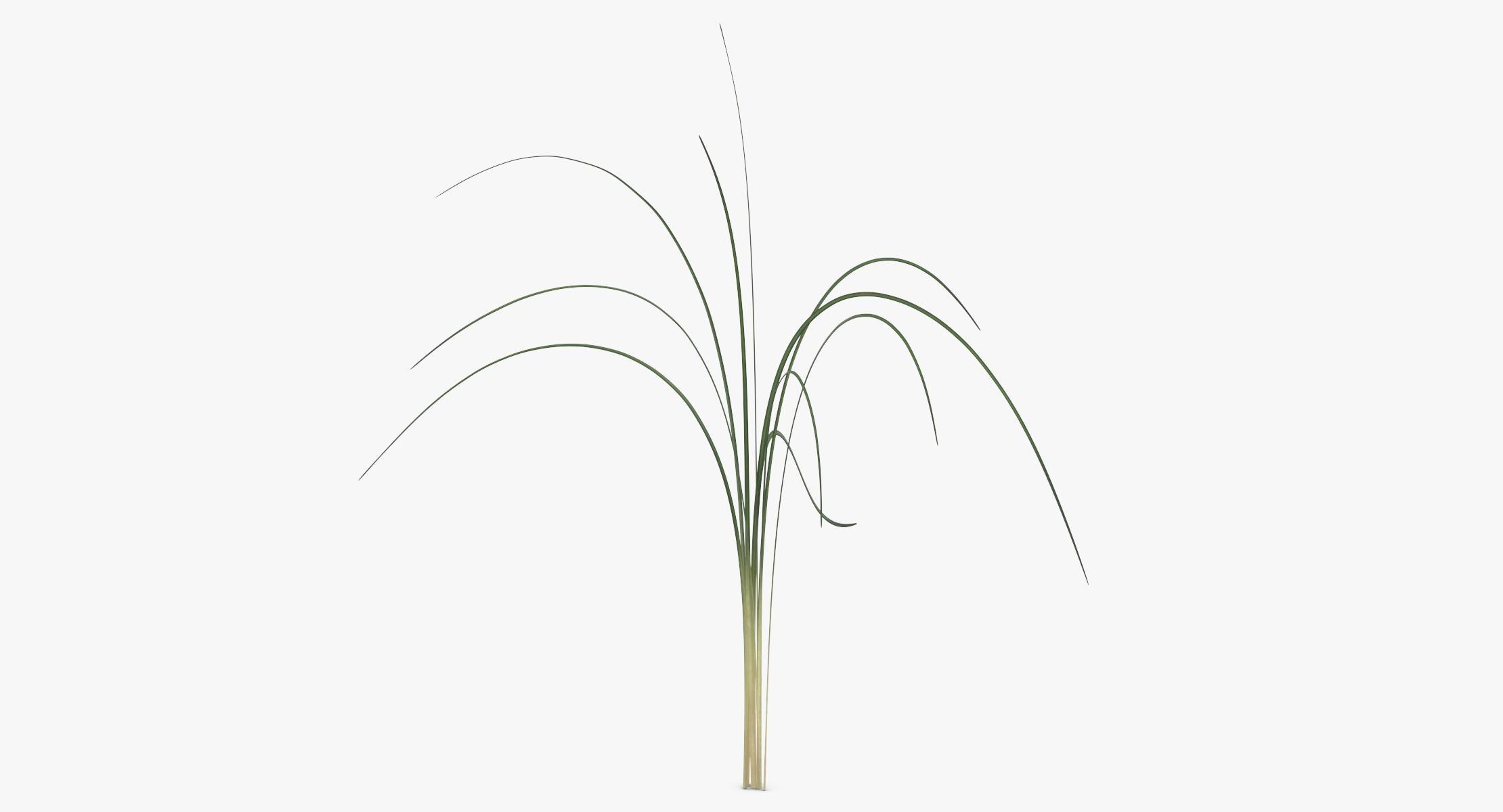 Xerophyllum Tenax - reel 1