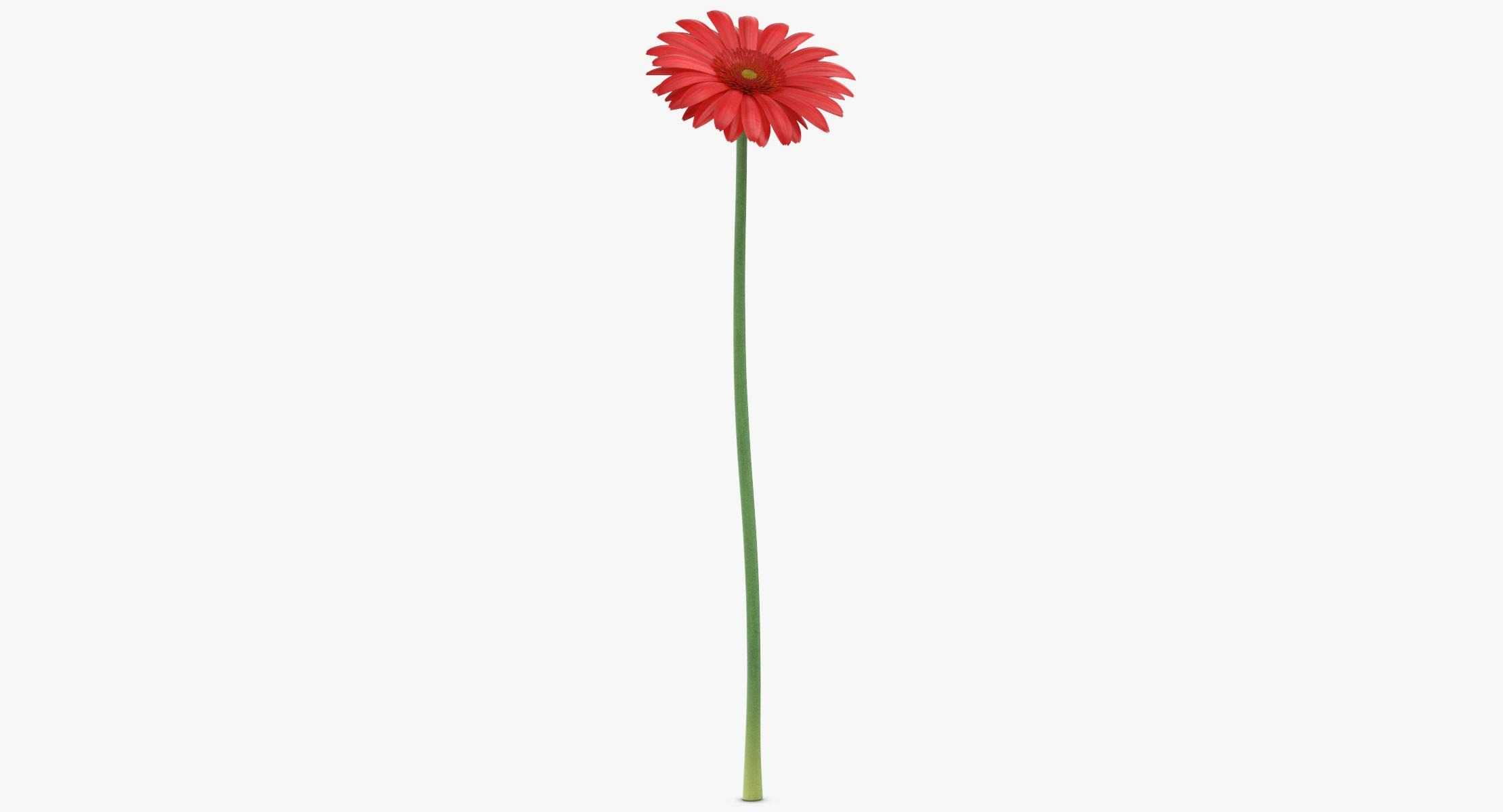 Gerbera - Red - reel 1