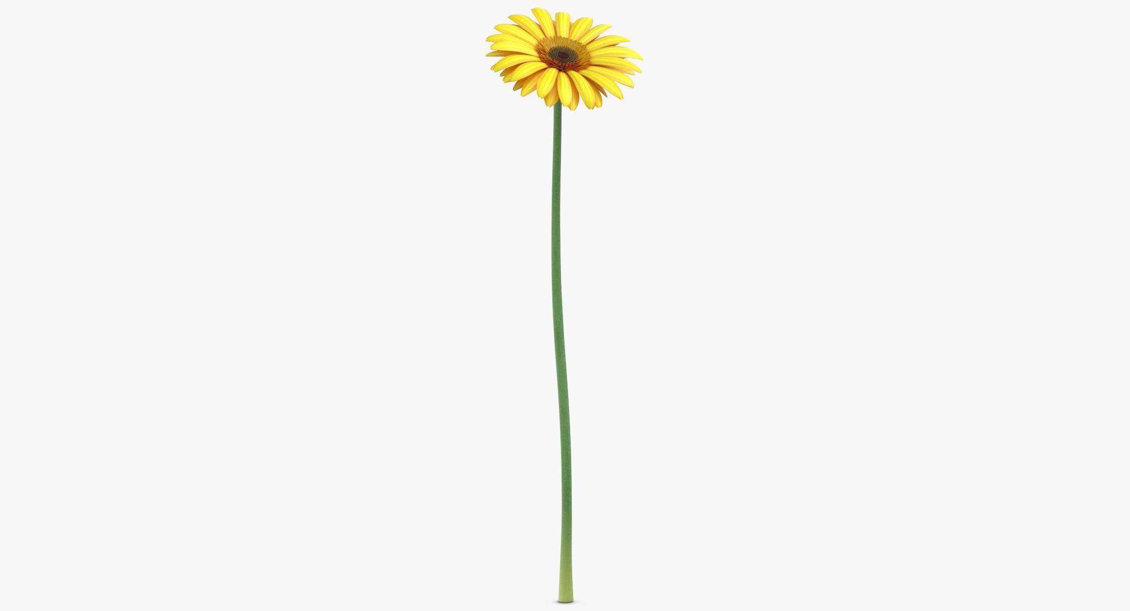 Gerbera - Yellow(1) - reel 1