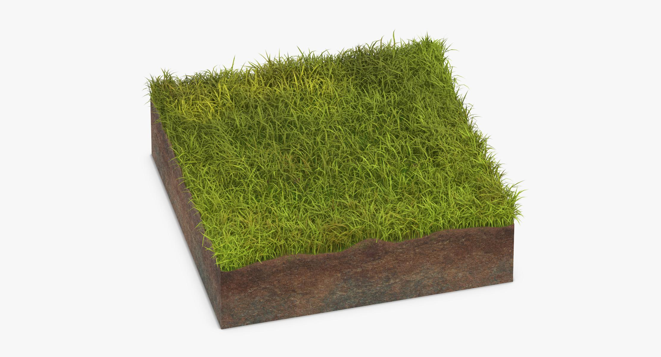 Grass Cross Sections 03 - reel 1