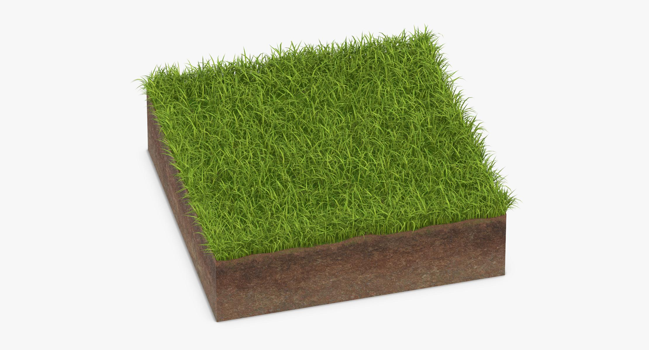 Grass Cross Sections 01 - reel 1