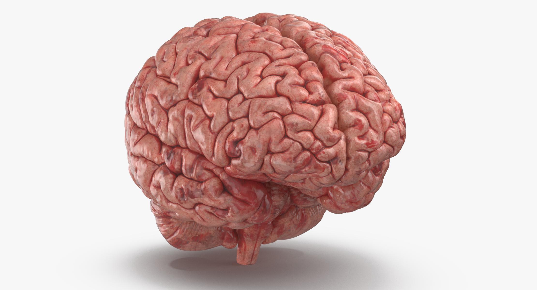 Human Brain - reel 1