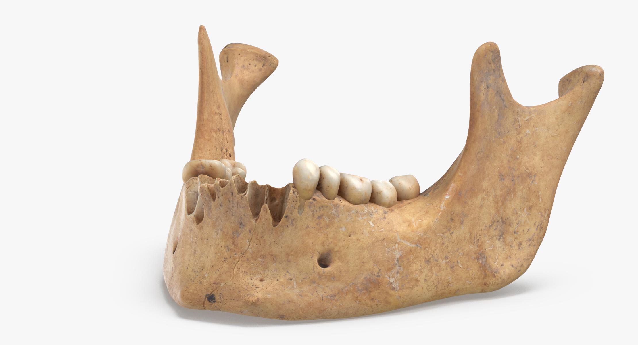 Human Jawbone ( Mandible ) 01 3D model - reel 1