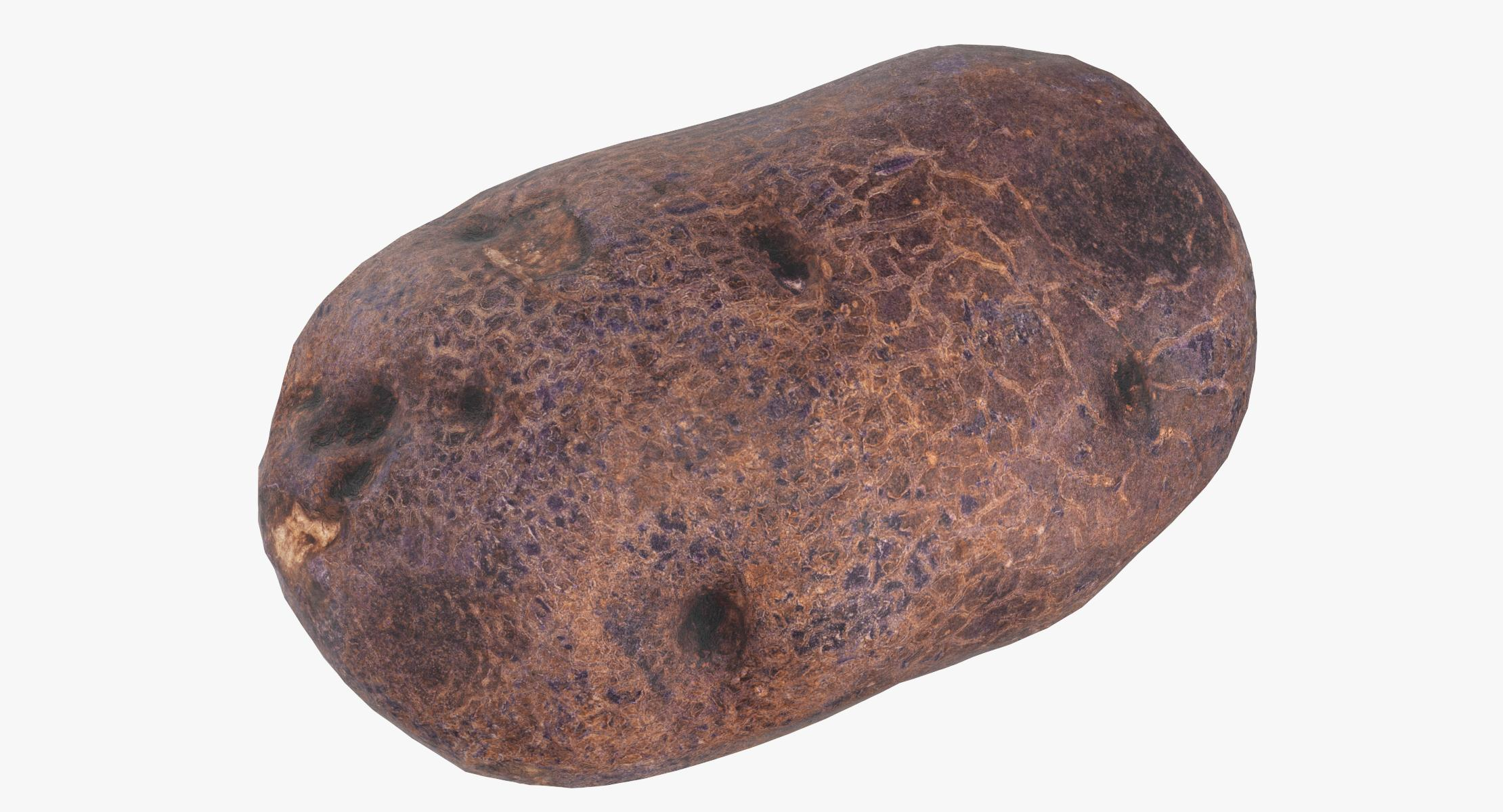 Purple Potato 05 Game Ready 3D model - reel 1