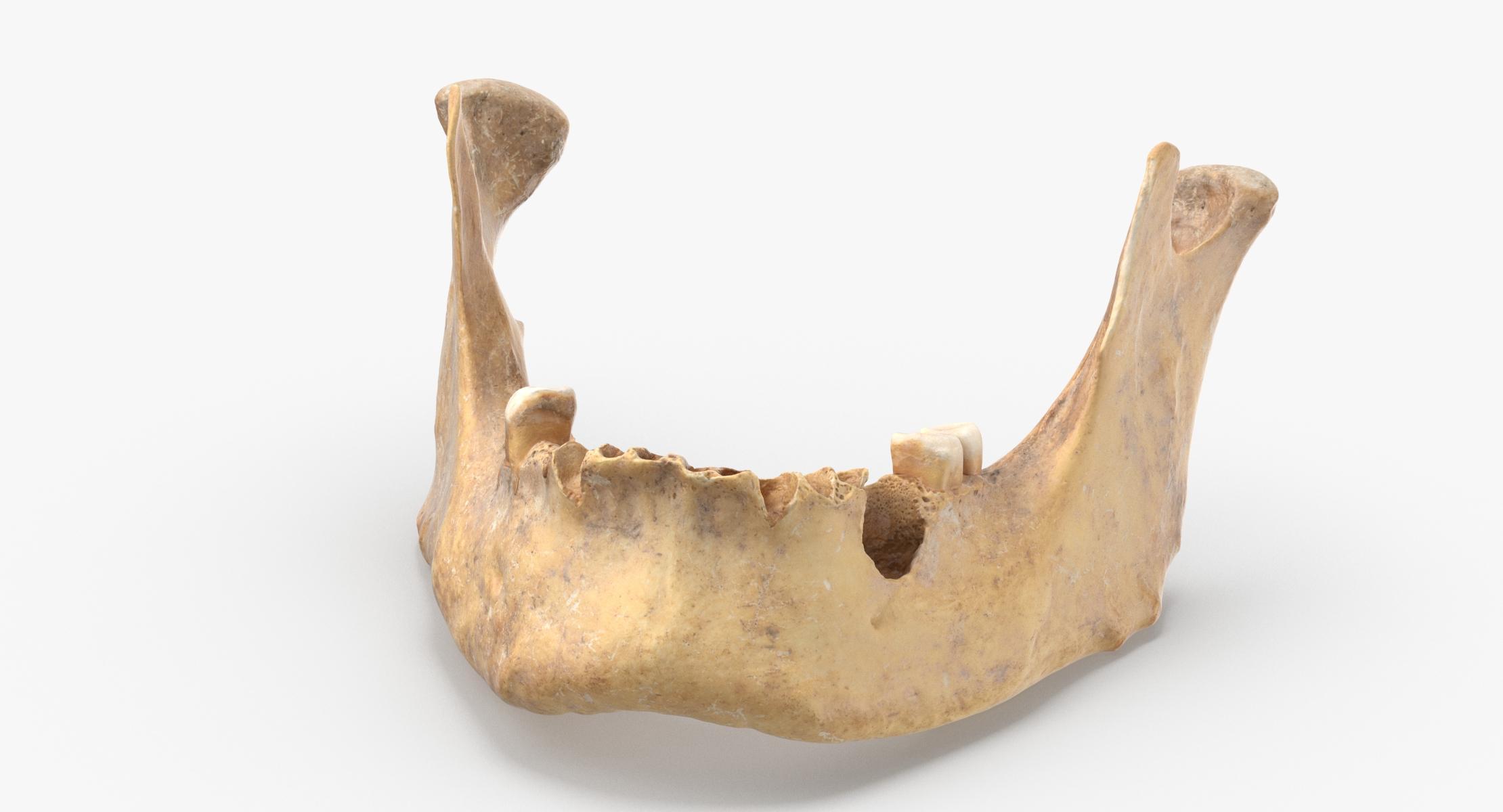 Human Jawbone ( Mandible ) 02 model - reel 1