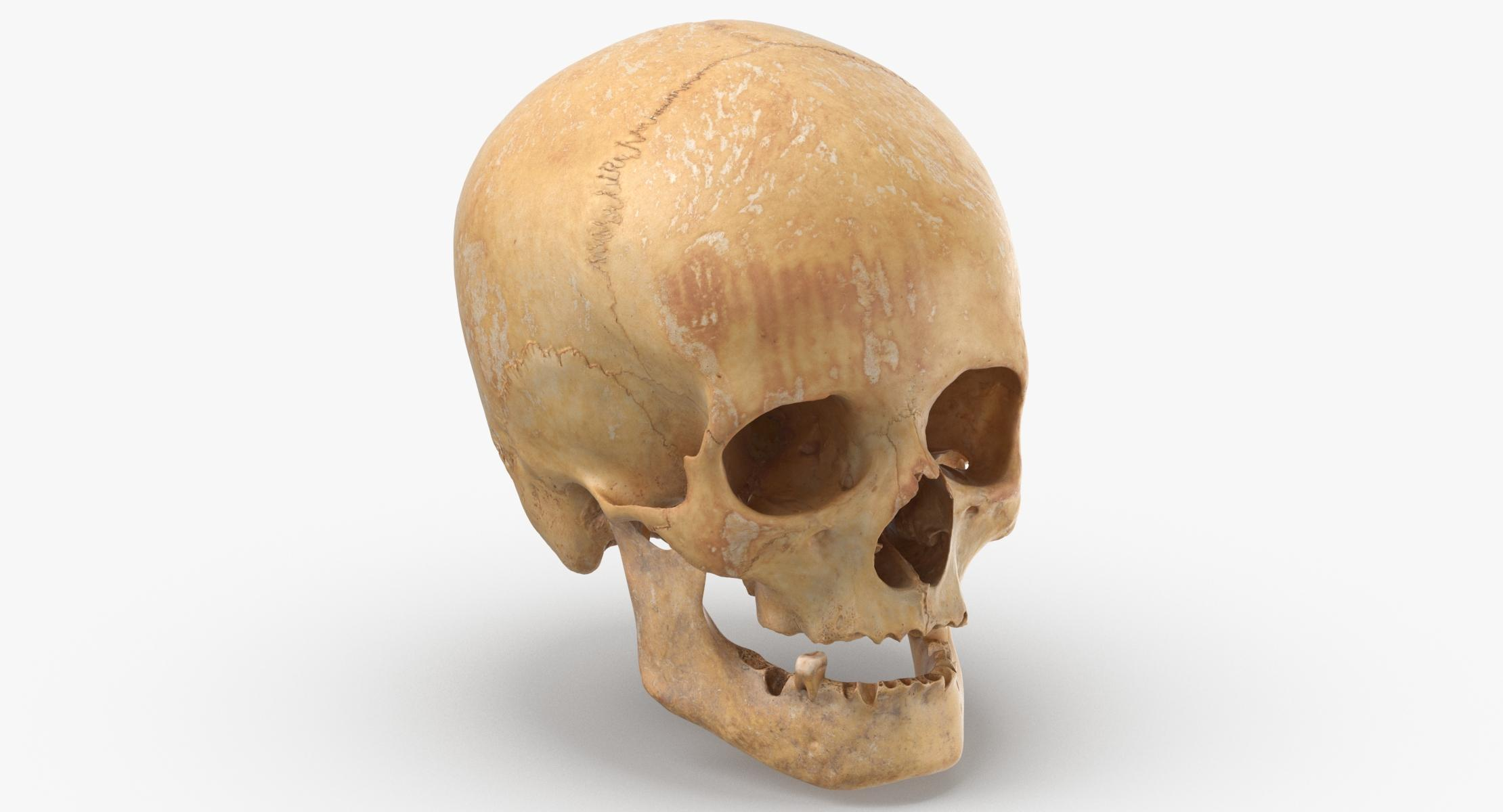 3D Human Female Skull With Jaw Damaged 01 - reel 1