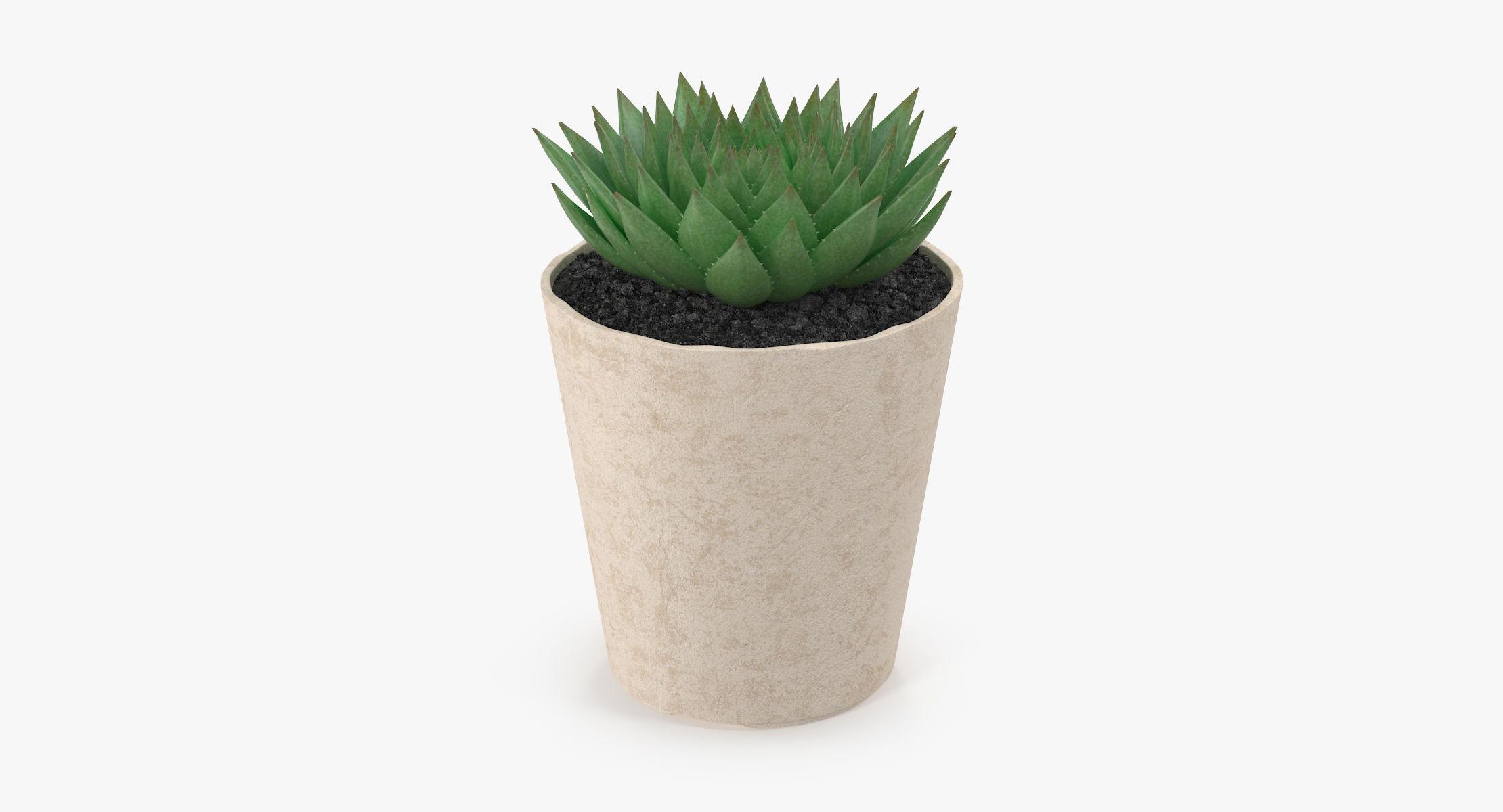 Succulent 20 - reel 1