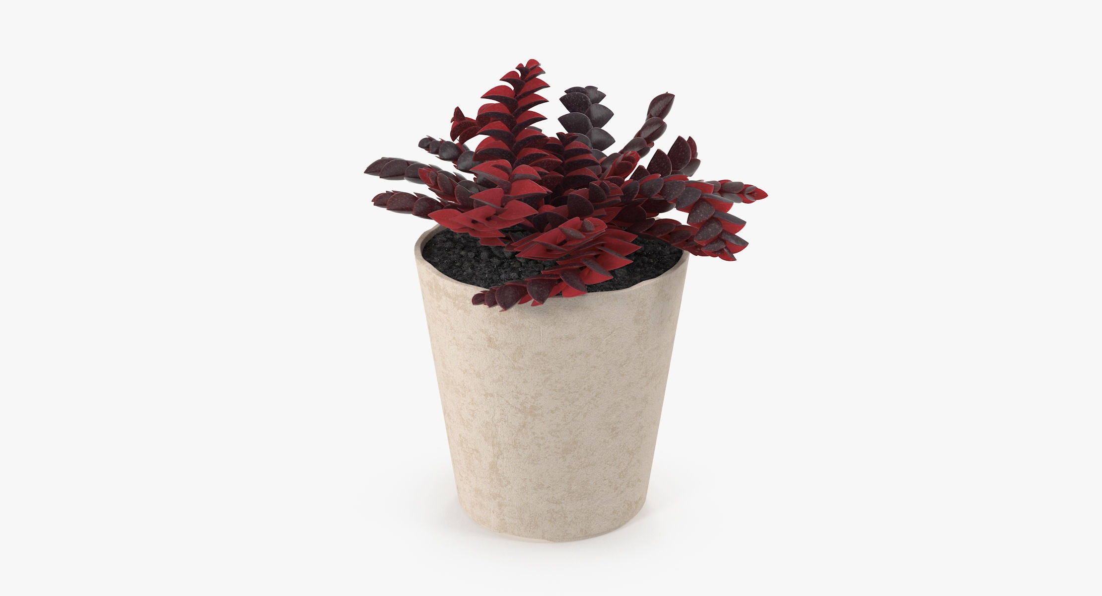 Succulent 17 - reel 1