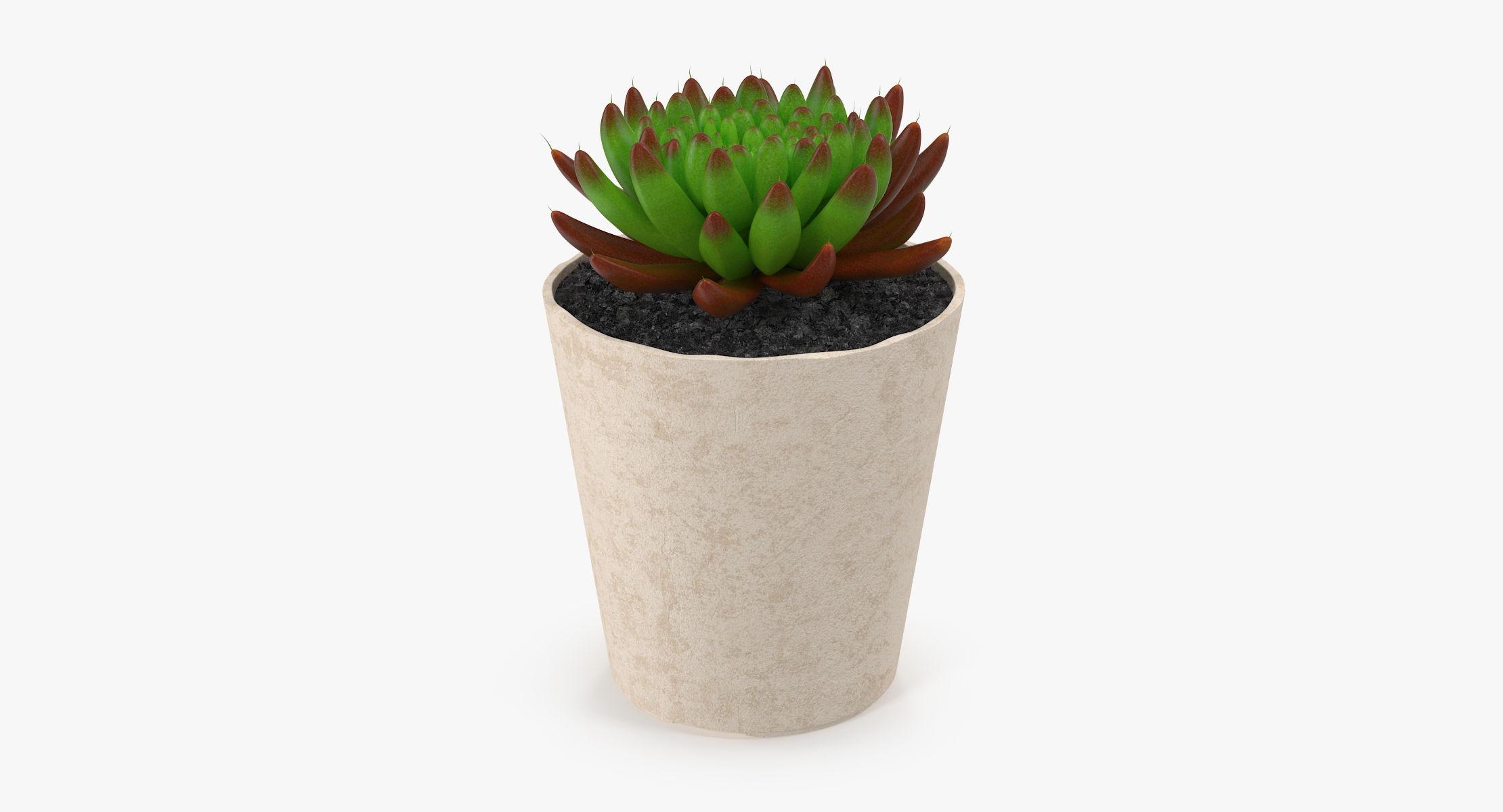 Succulent 21 - reel 1