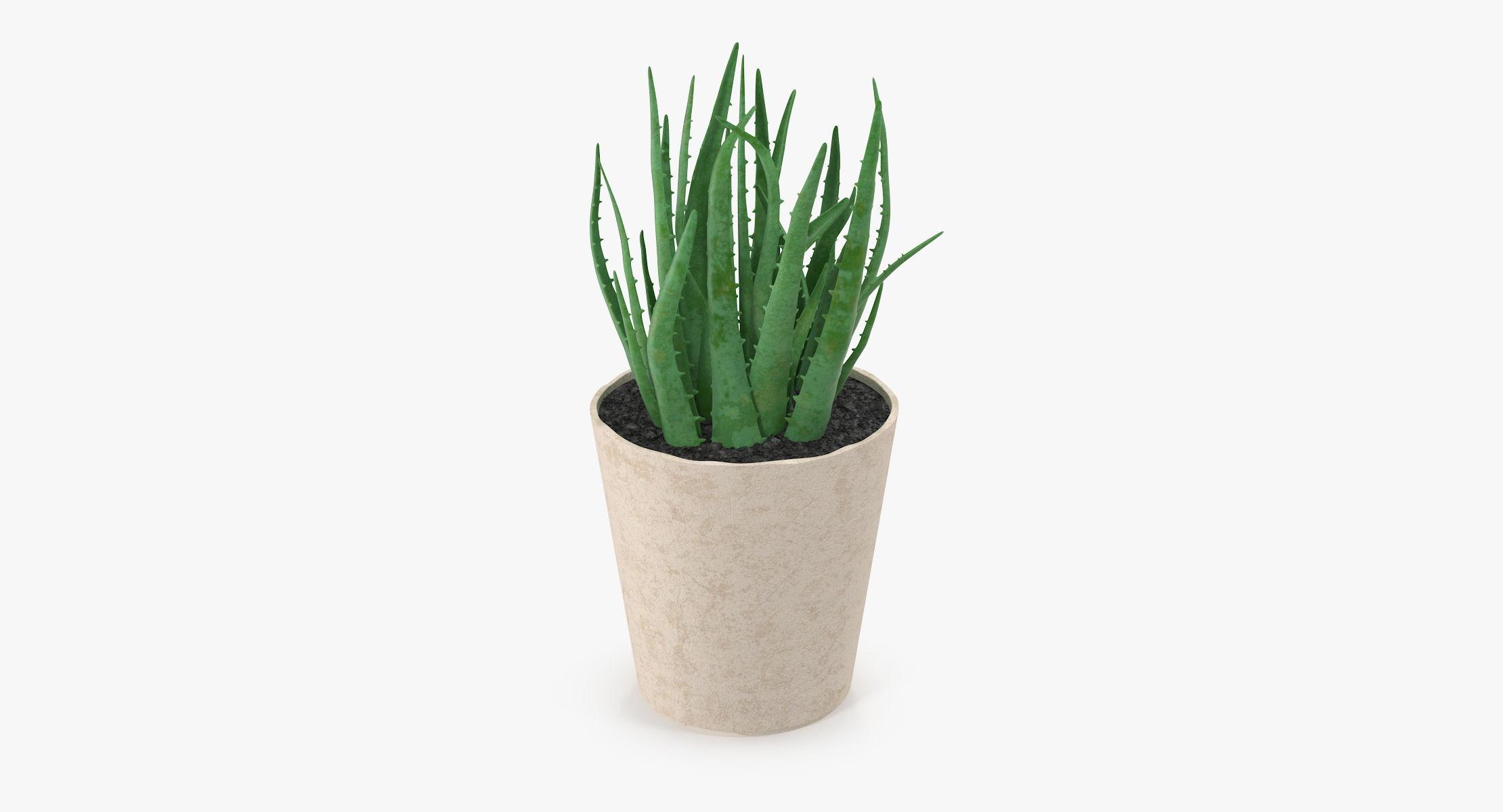Succulent 19 - reel 1