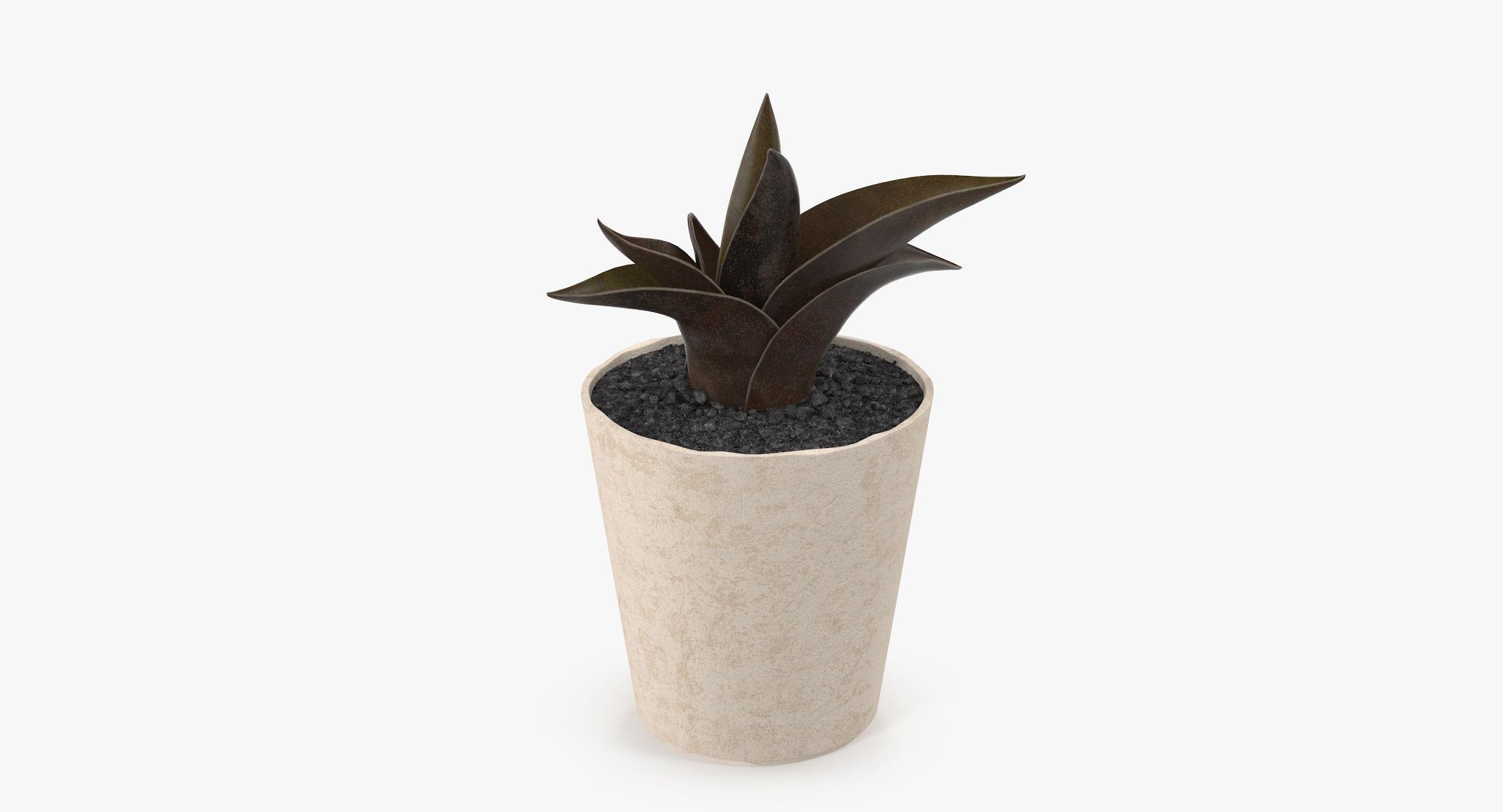 Succulent 18 - reel 1