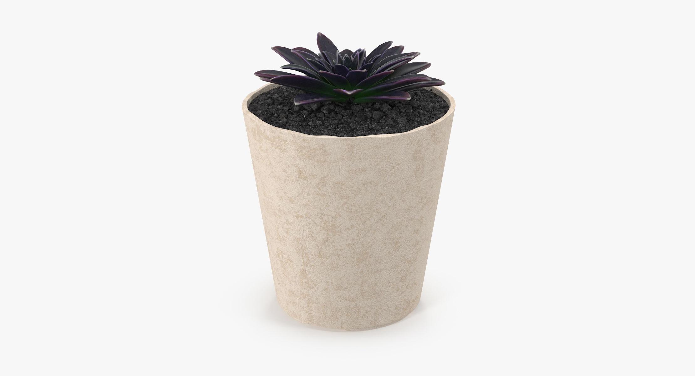 Succulent 16 - reel 1