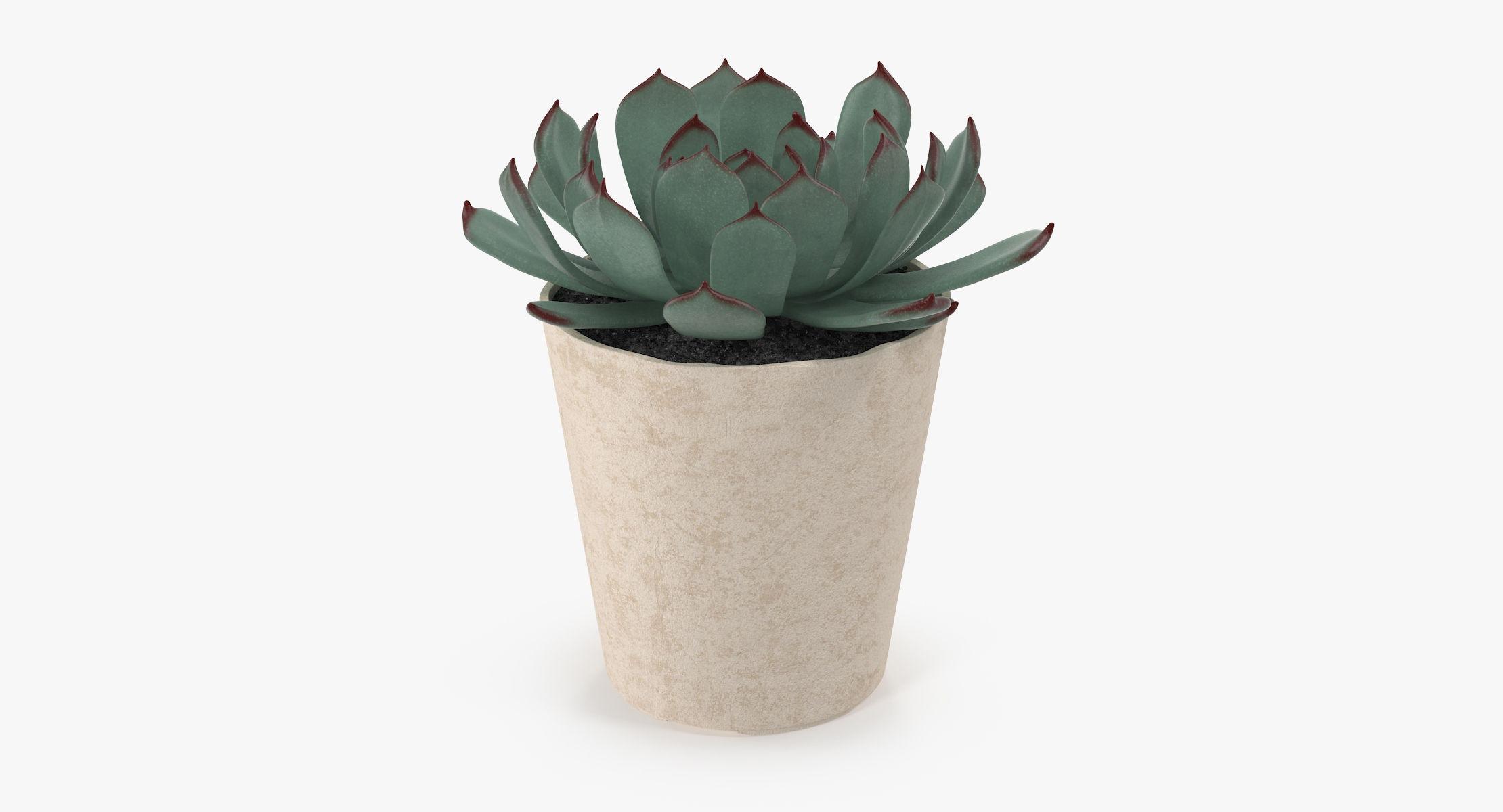 Succulent 15 - reel 1