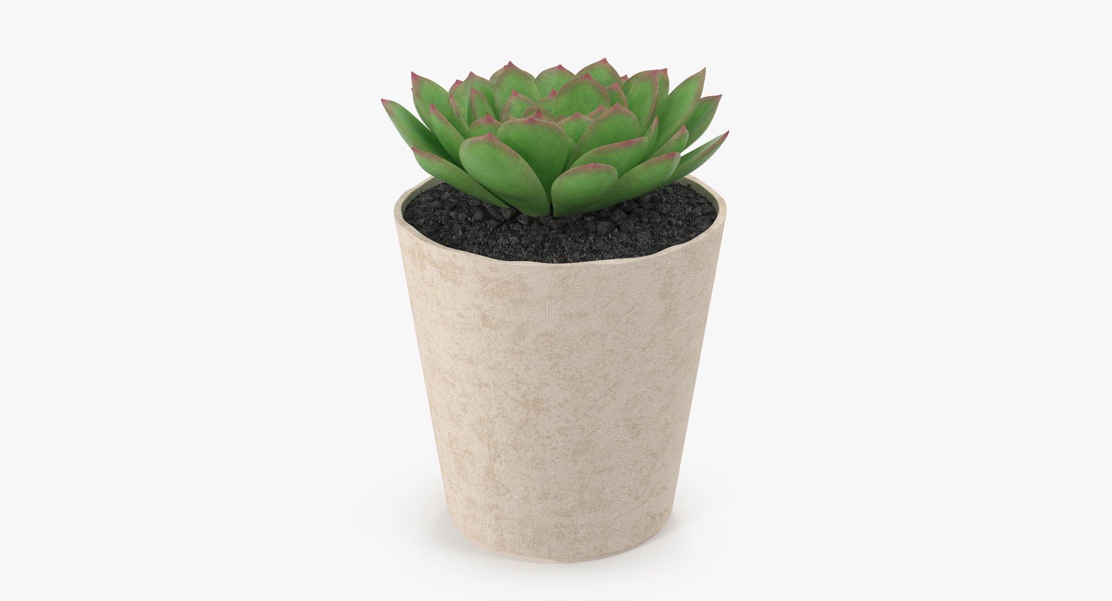 Succulent 14 - reel 1