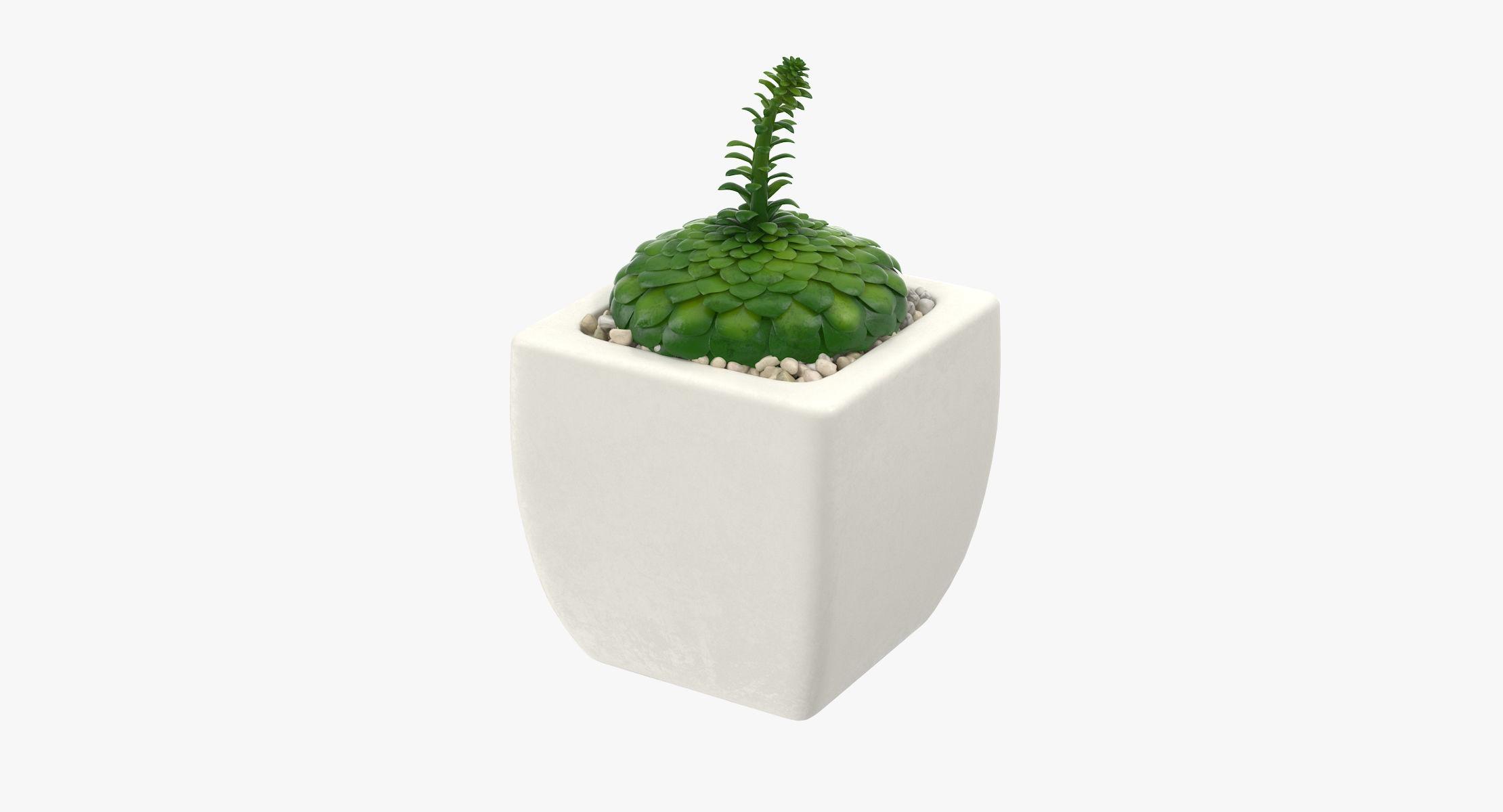 Succulent 13 - reel 1