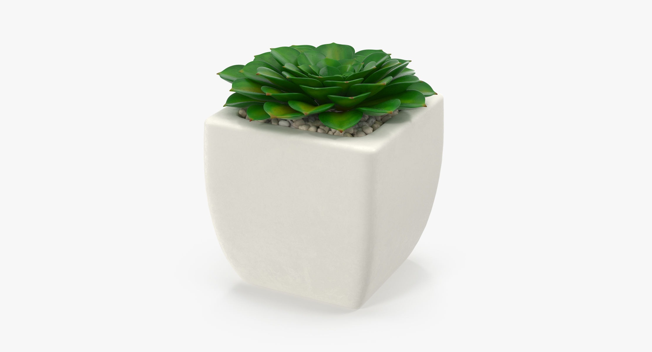 Succulent 11 - reel 1