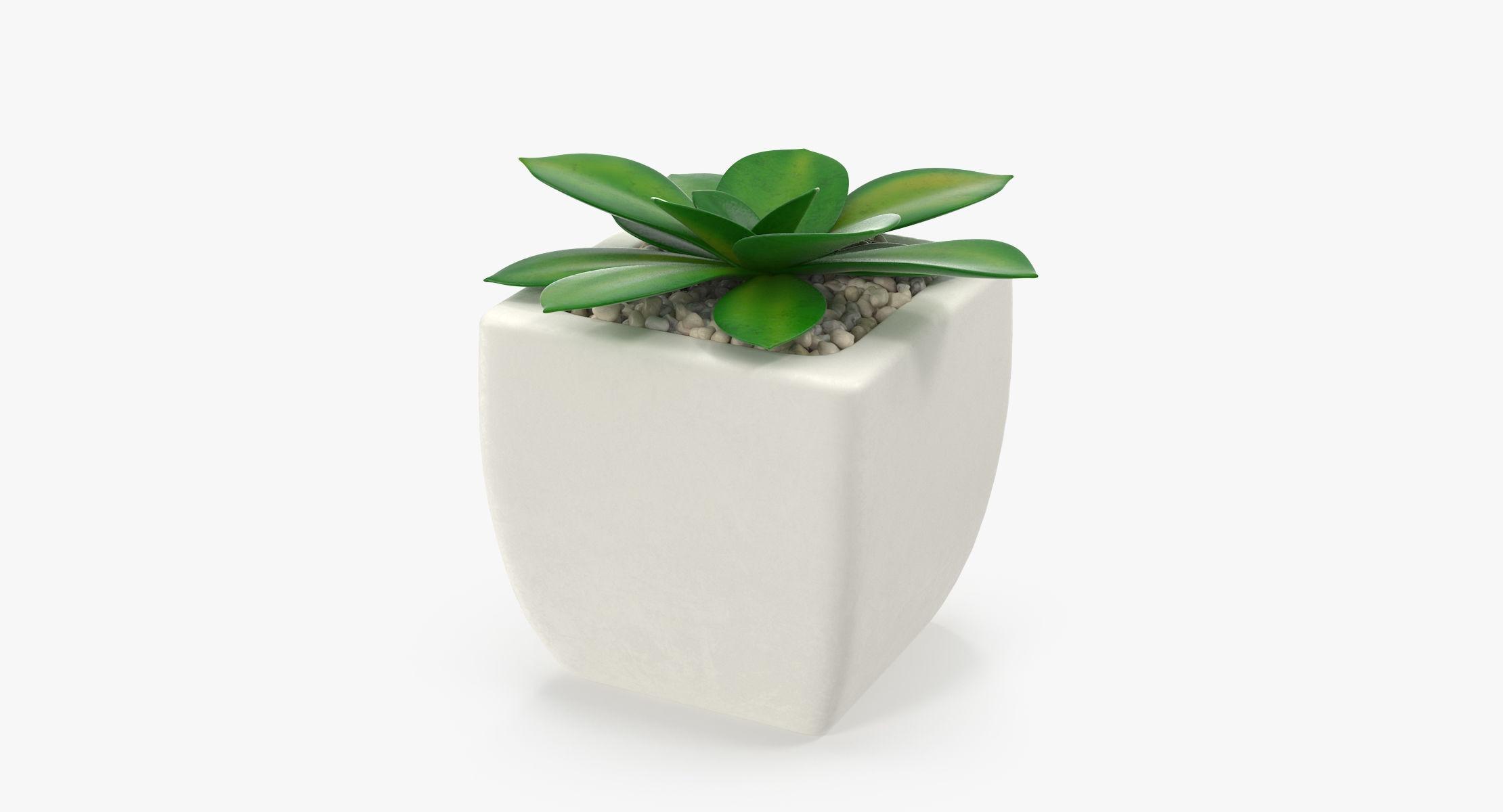 Succulent 10 - reel 1