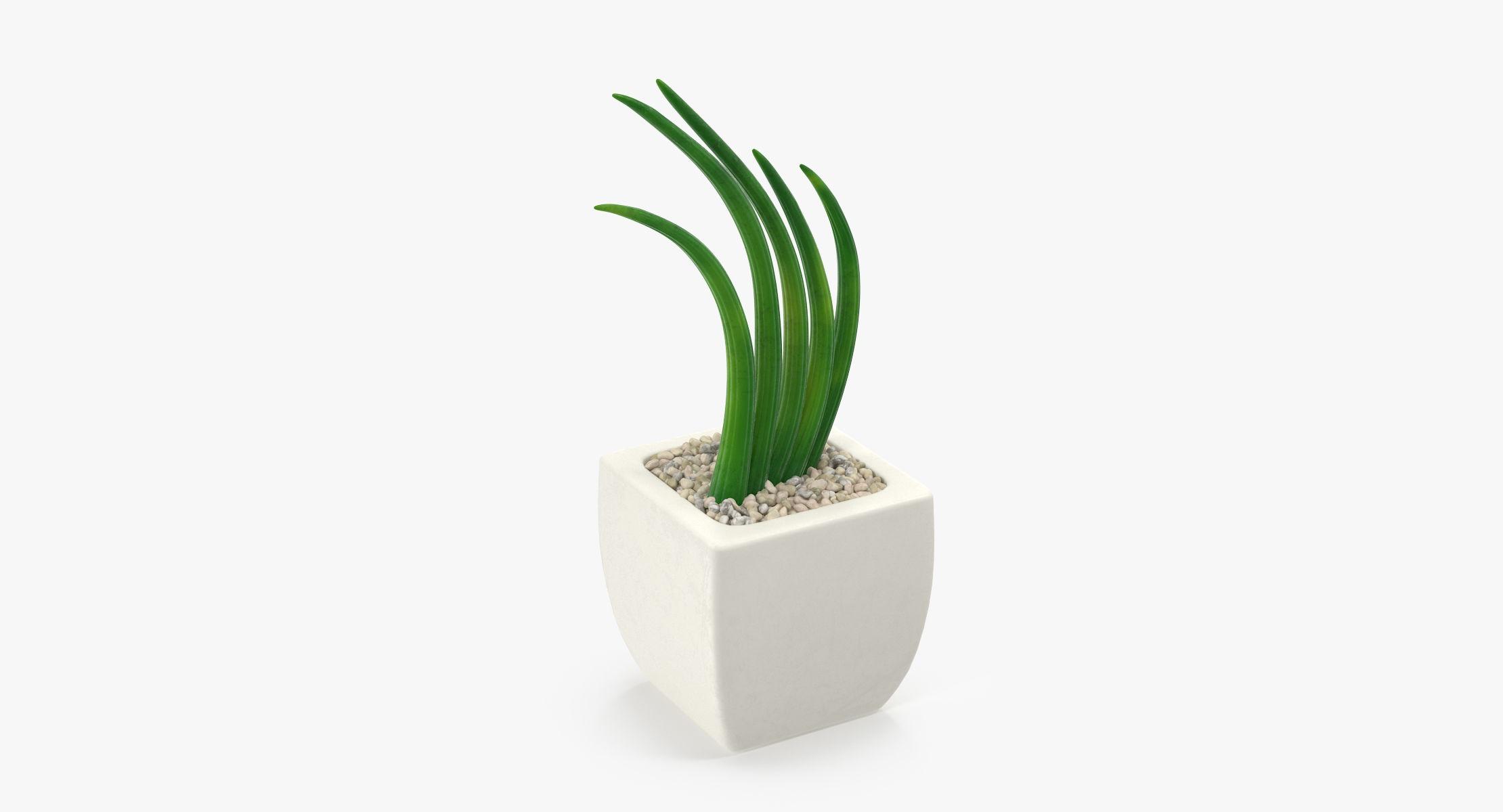 Succulent 09 - reel 1