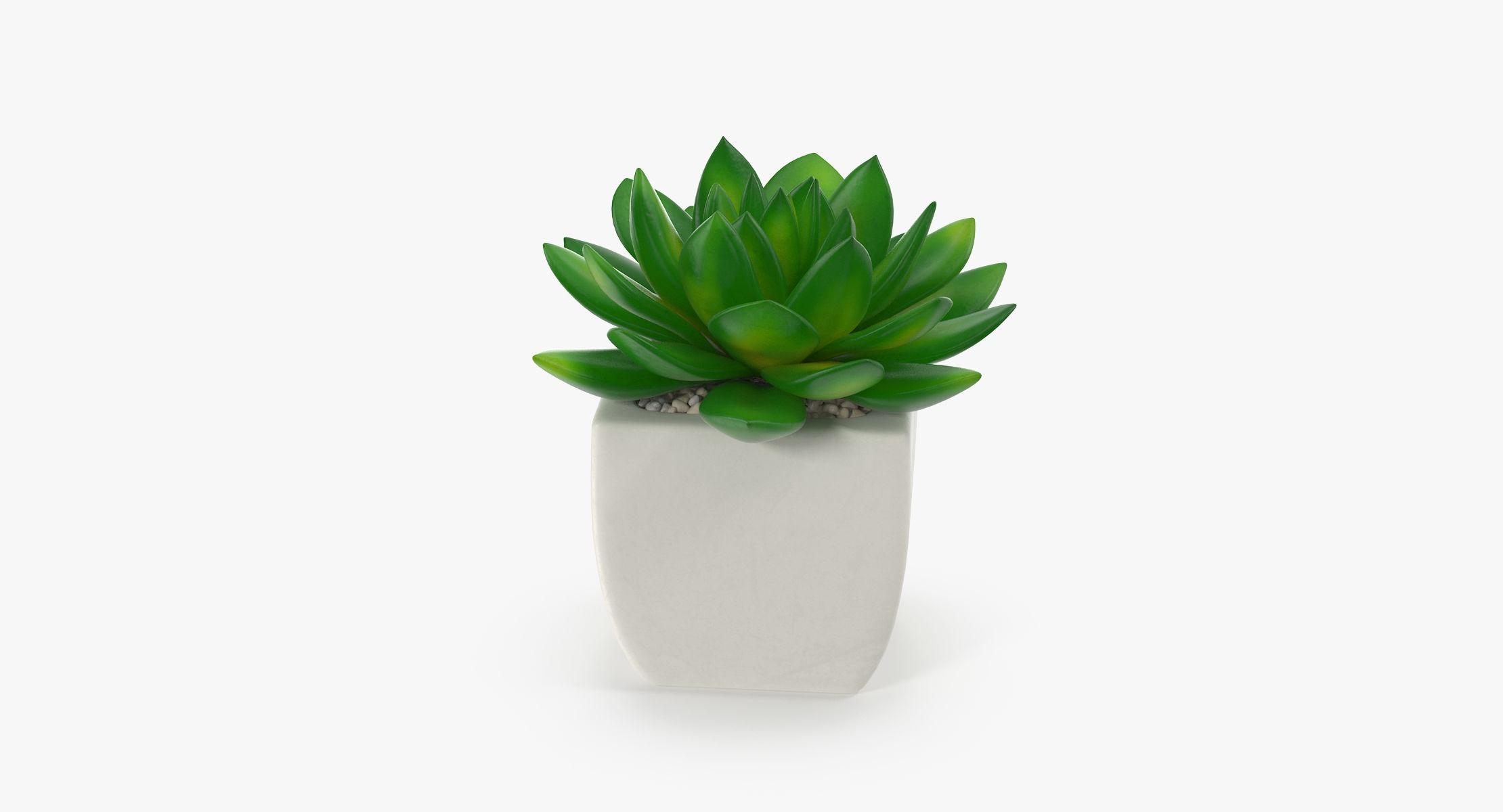 Succulent 08 - reel 1