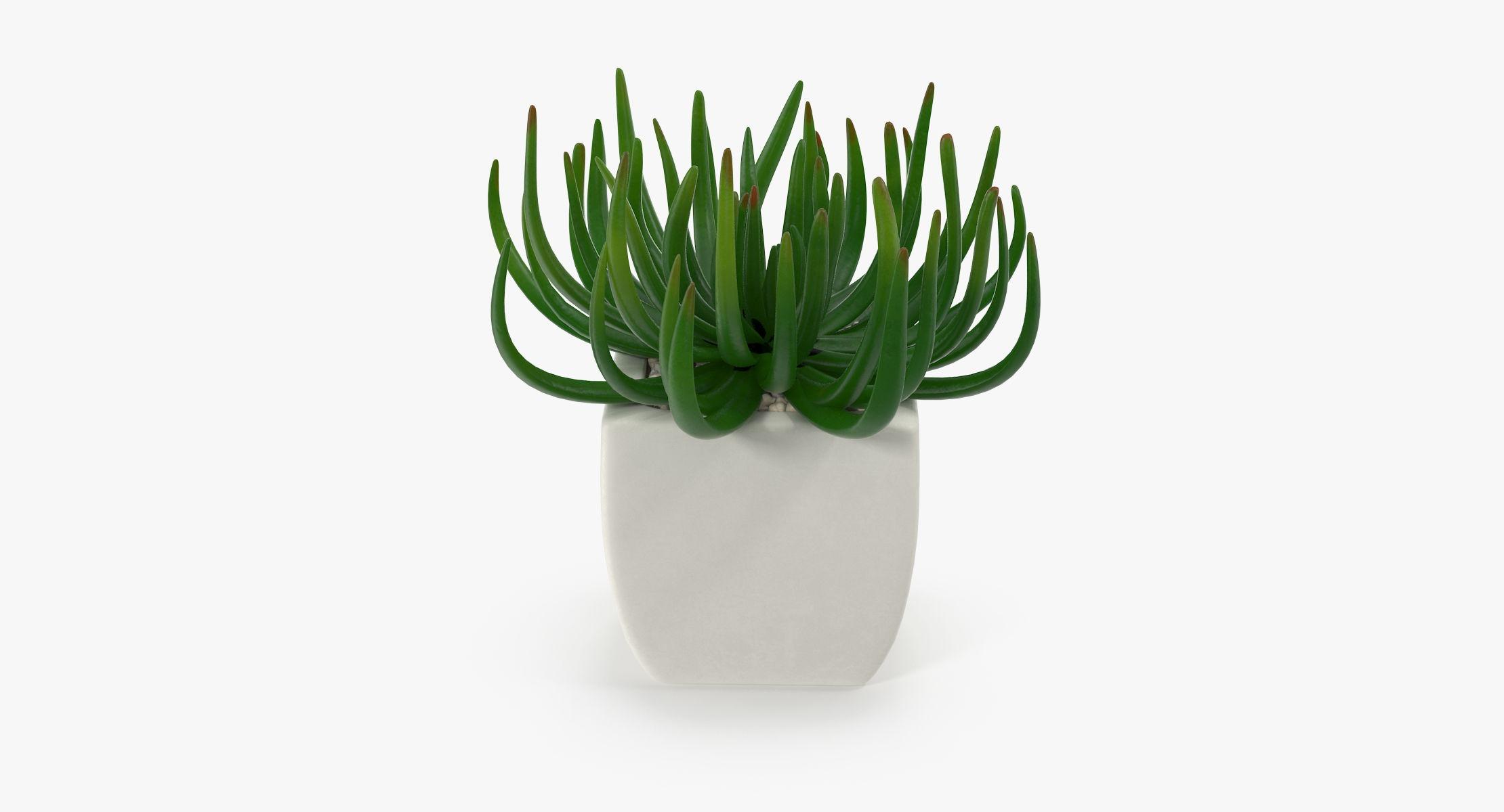 Succulent 06 - reel 1