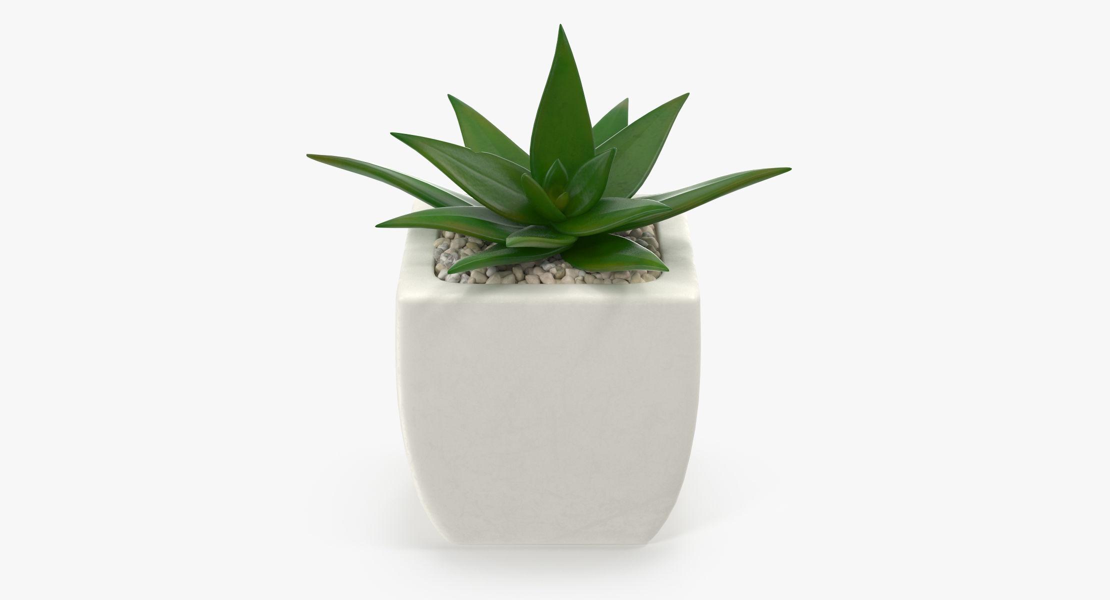 Succulent 04 - reel 1