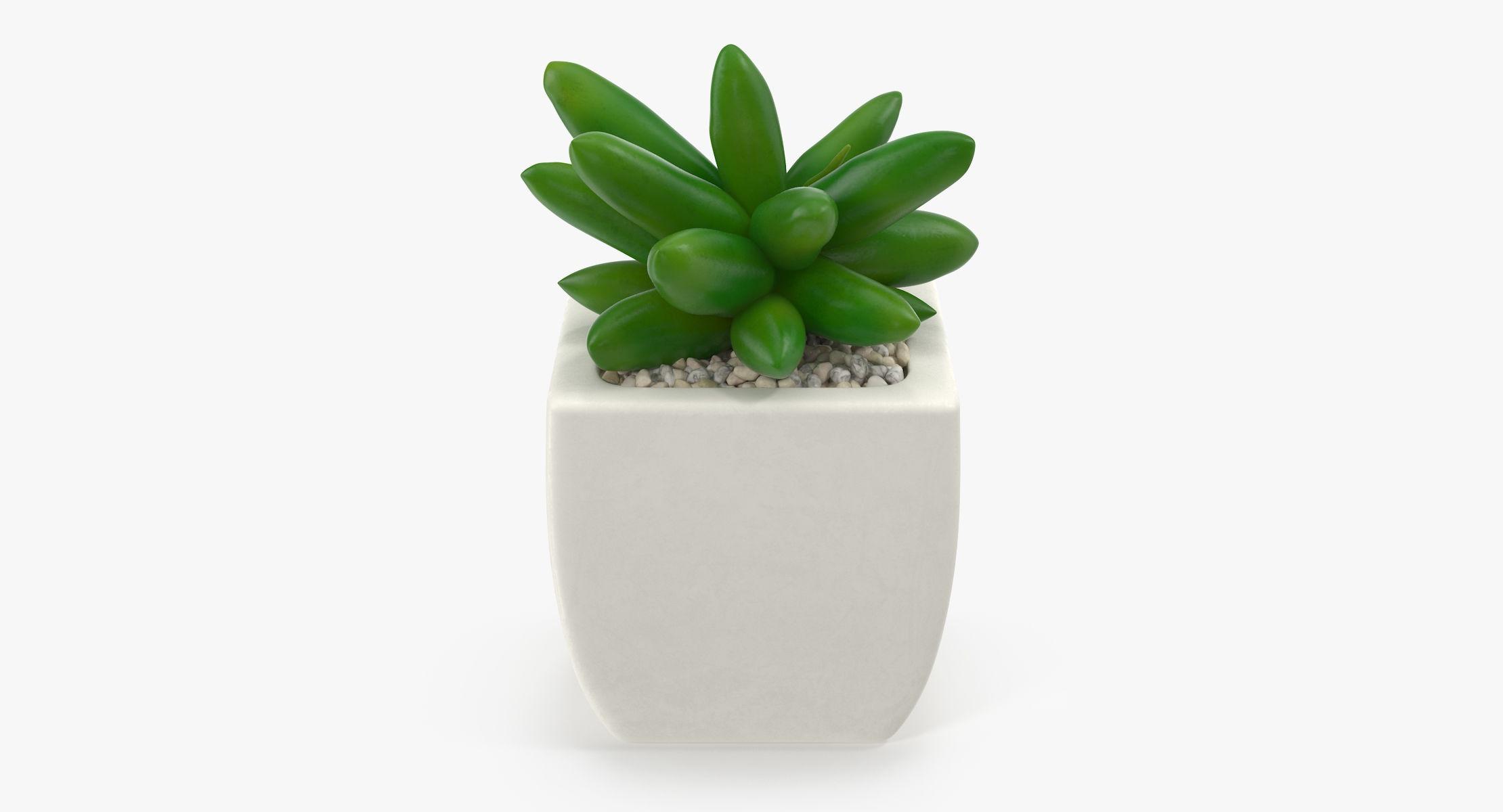 Succulent 03 - reel 1