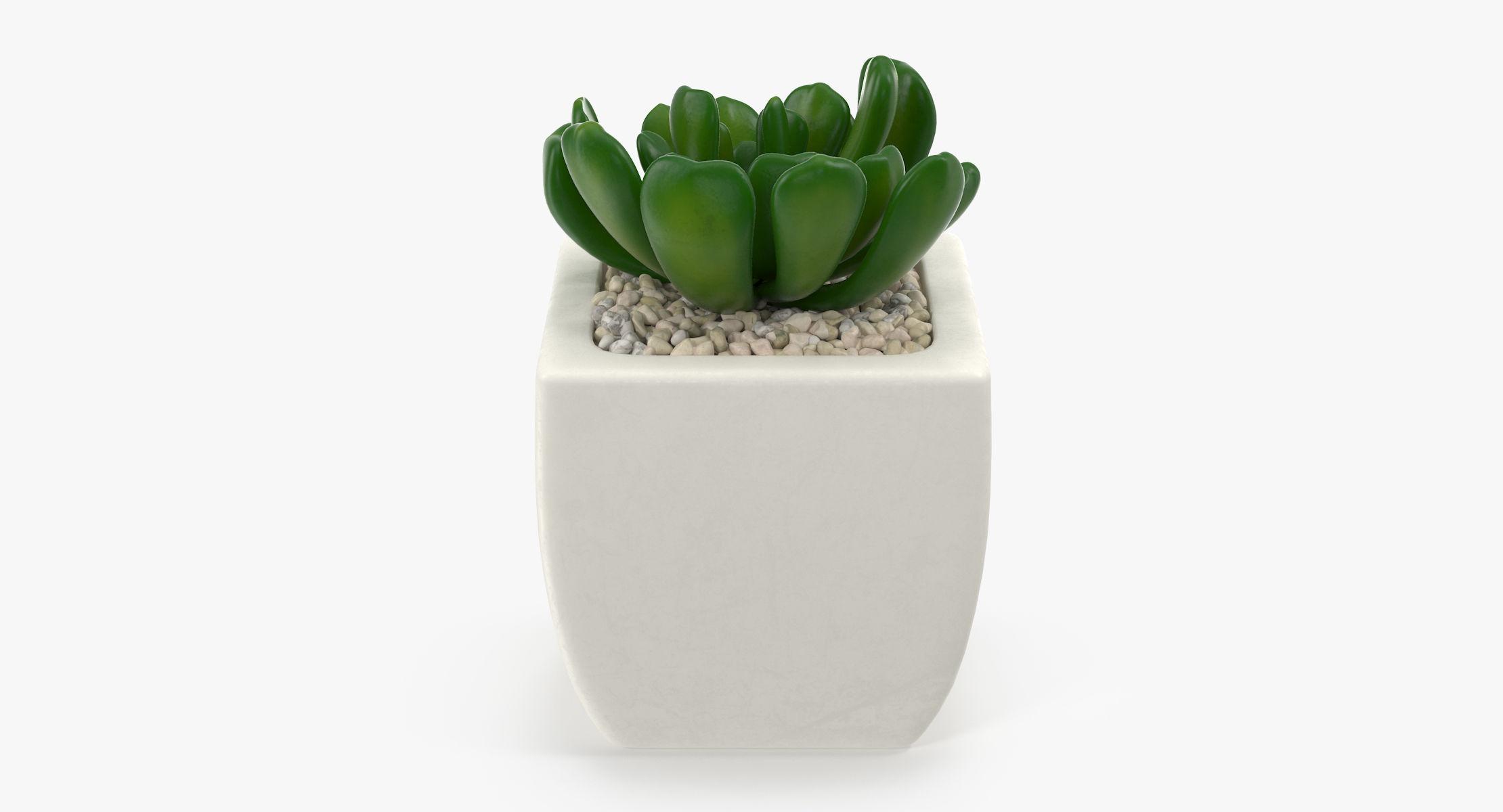 Succulent 02 - reel 1