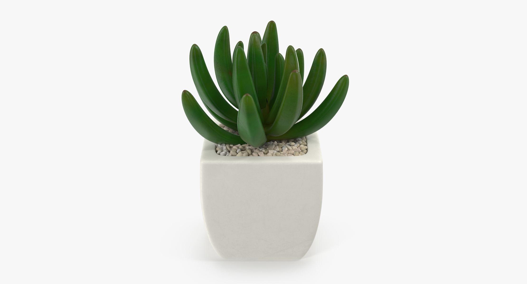 Succulent 01 - reel 1