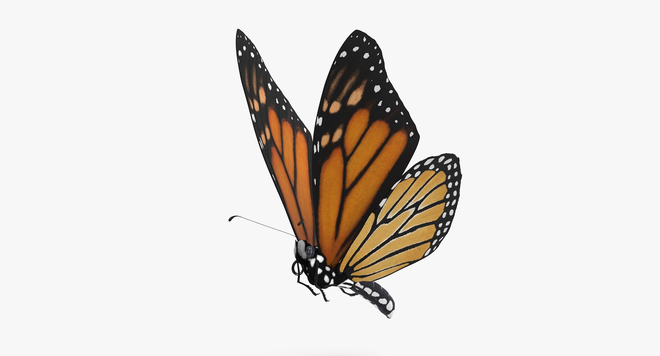 Monarch Butterfly Flying - reel 1