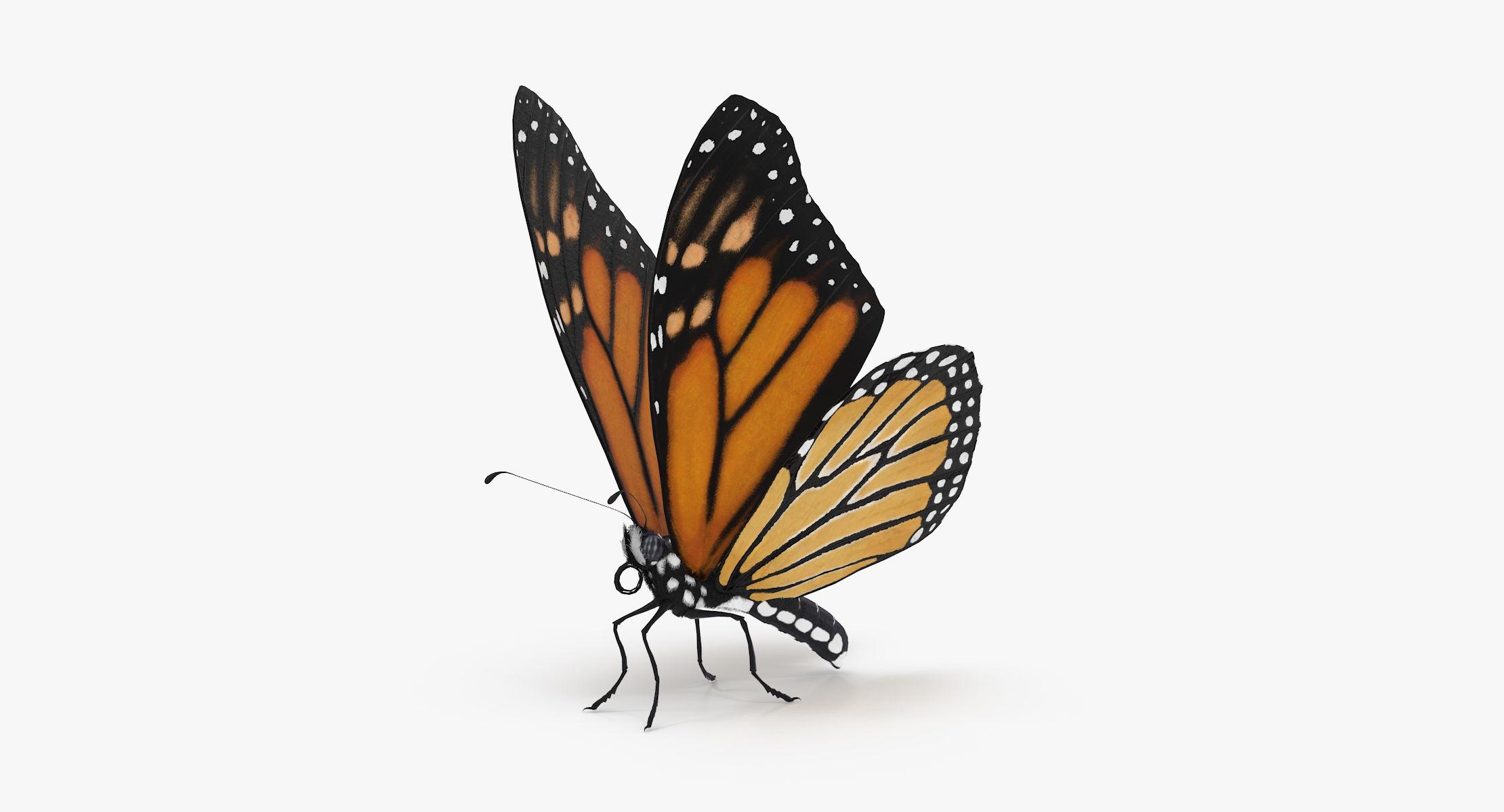 Monarch Butterfly Standing 01 - reel 1