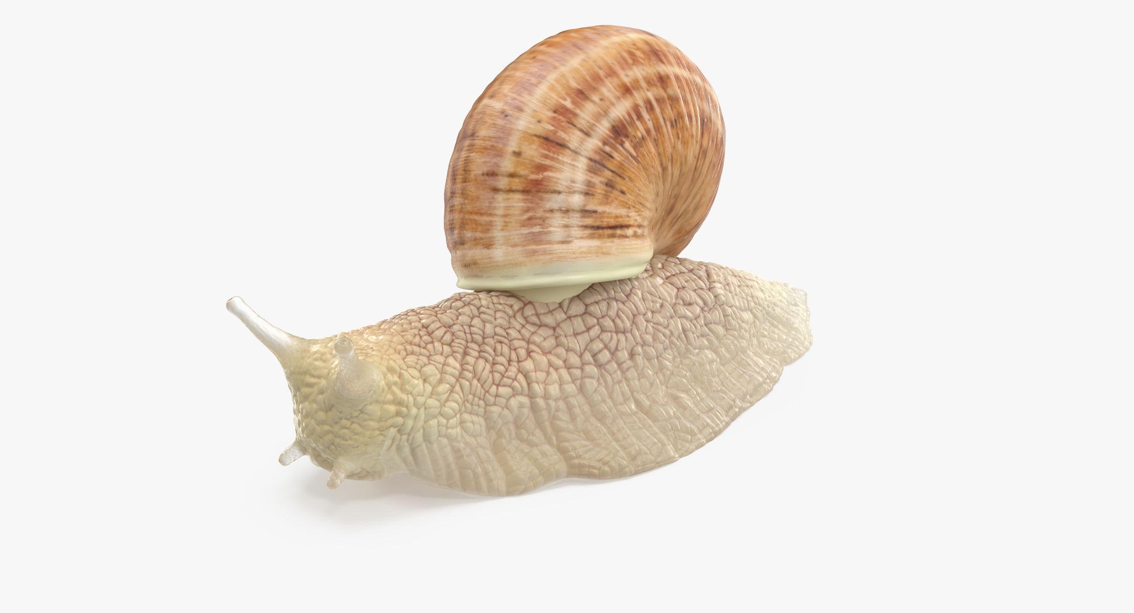 Snail 01 - reel 1