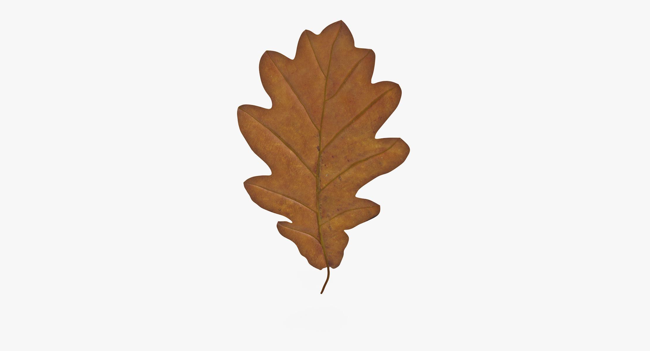 Oak Leaf Yellow 01 - reel 1
