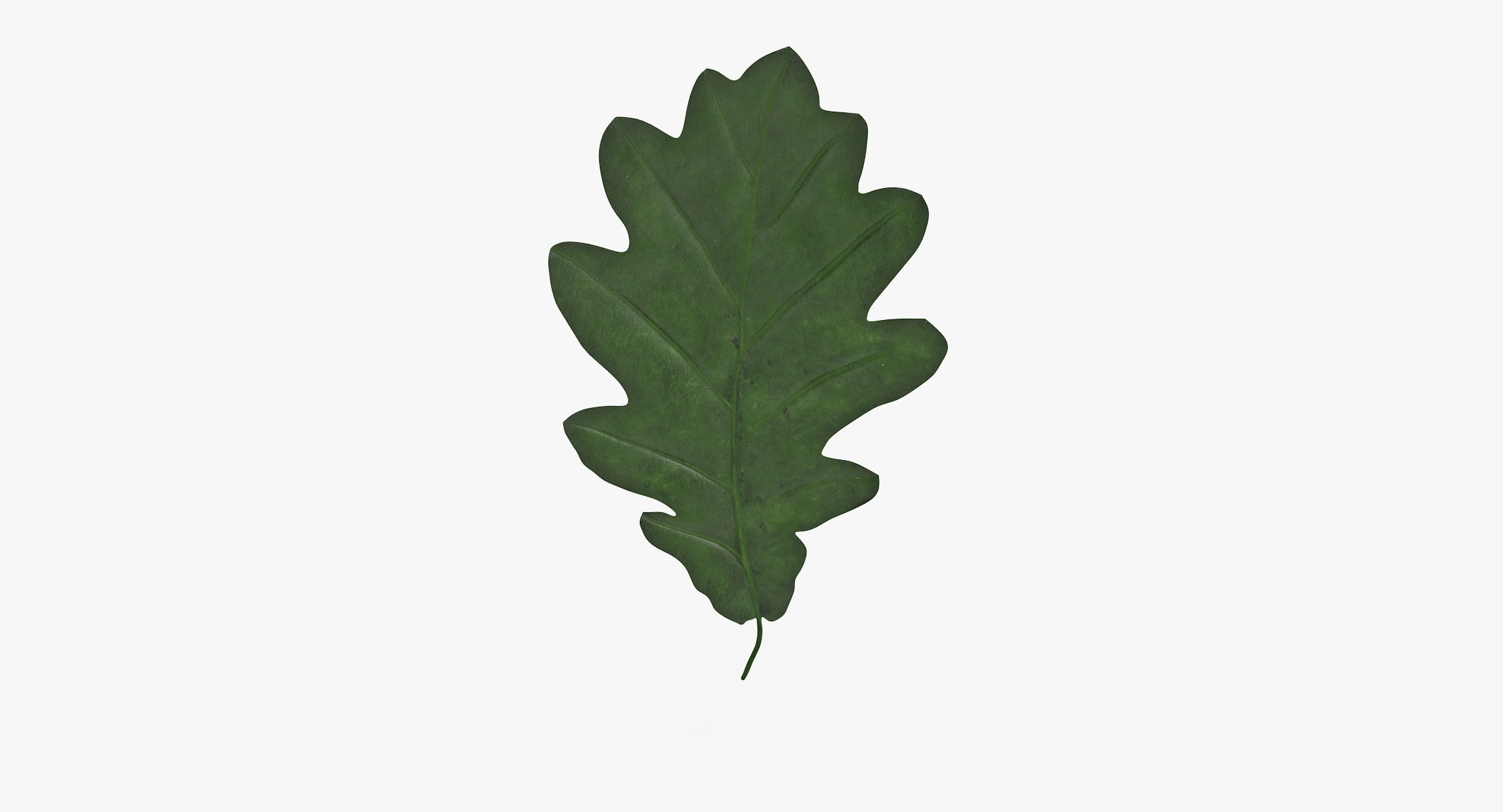 Oak Leaf Green 01 - reel 1