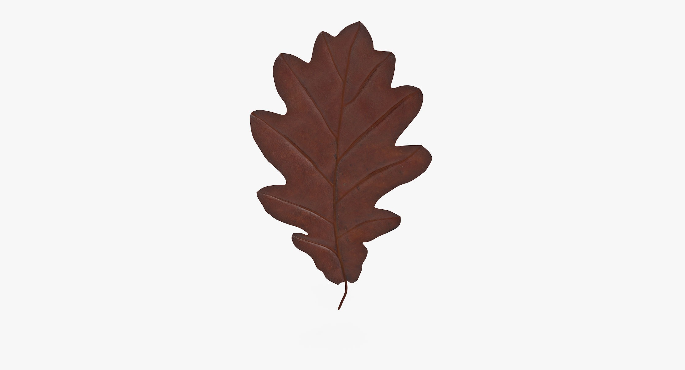 Oak Leaf Brown 01 - reel 1