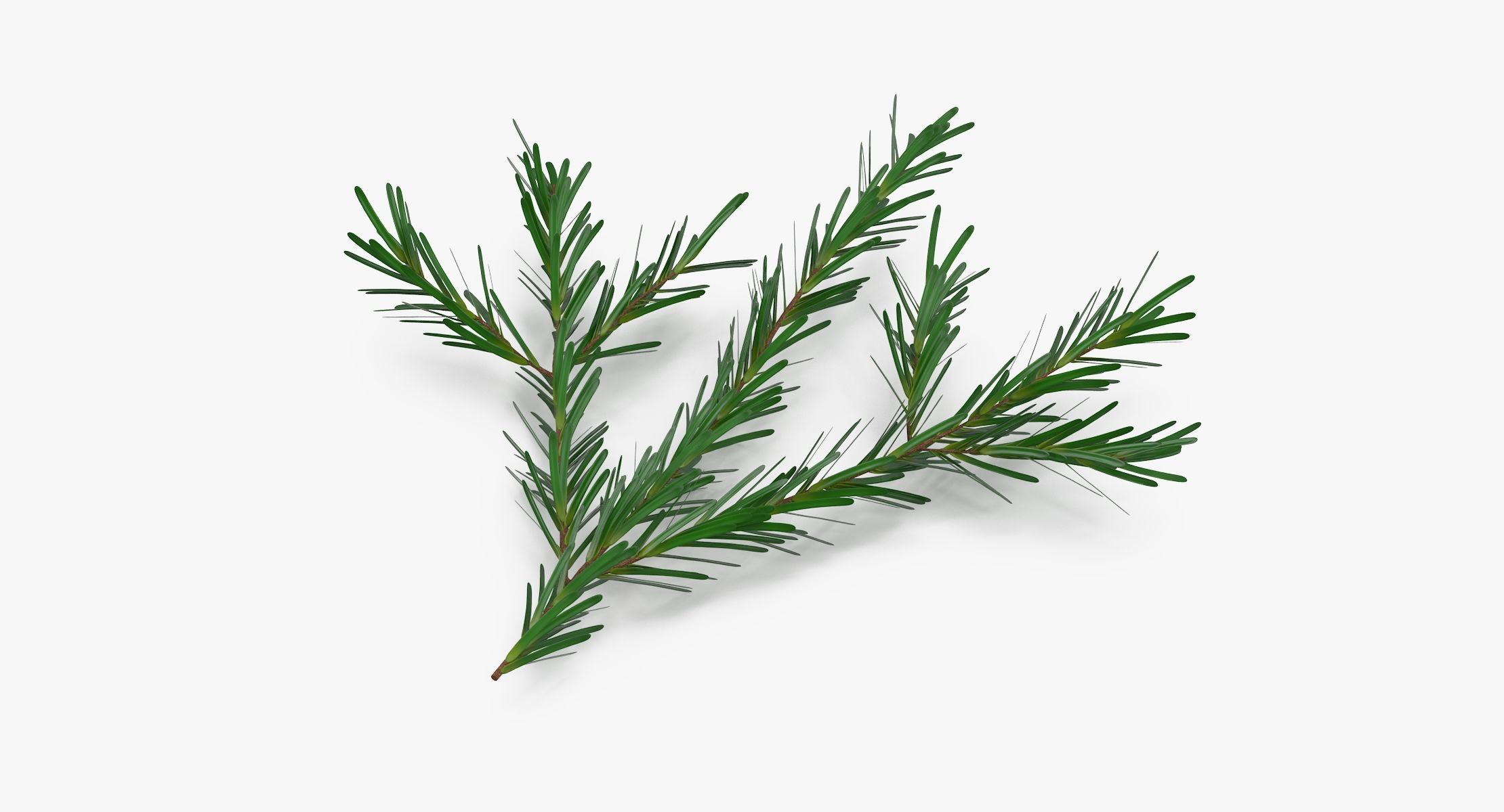 Pine Tree Sprig 03 - reel 1