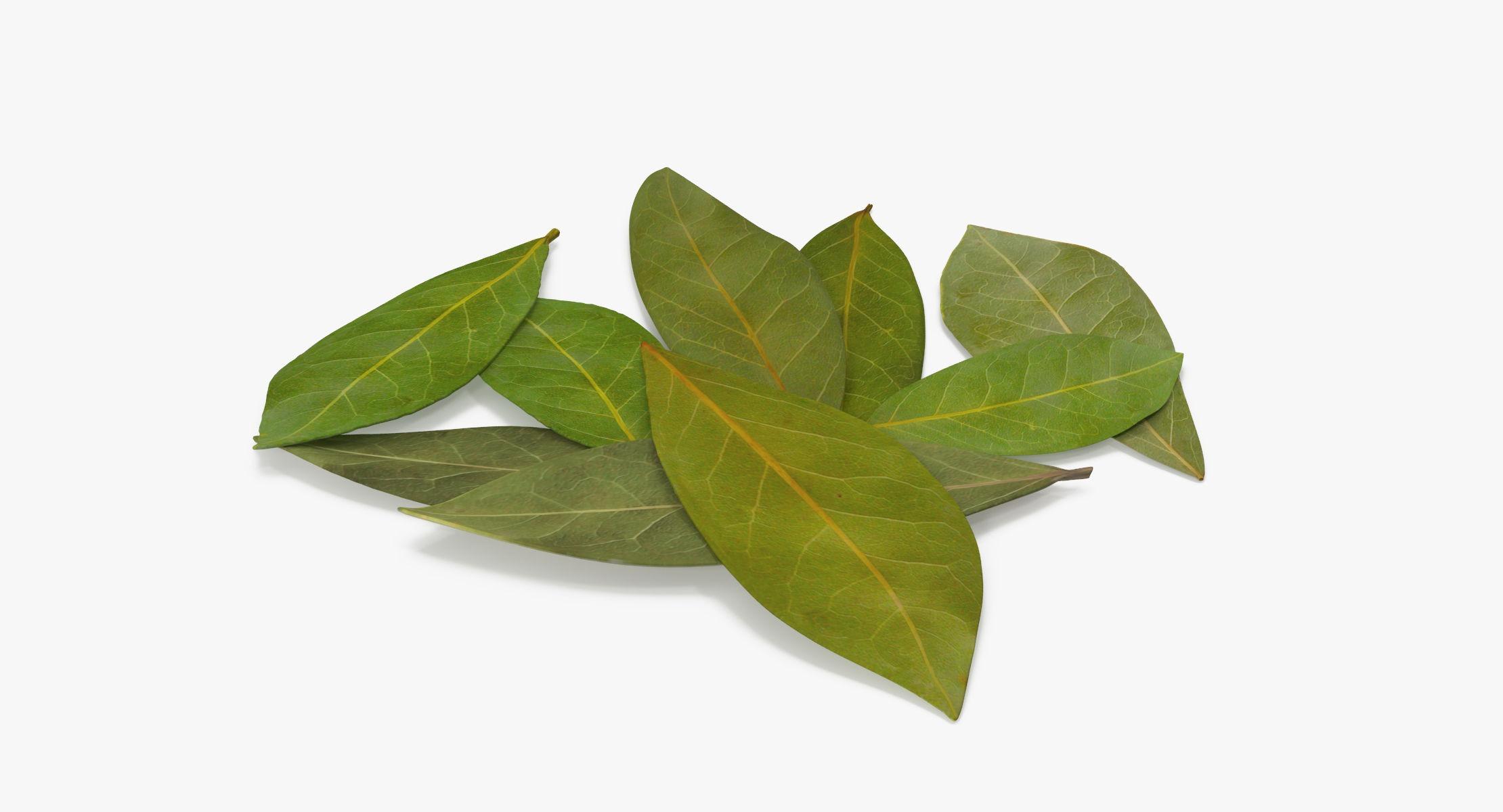 Bay Leaves - reel 1