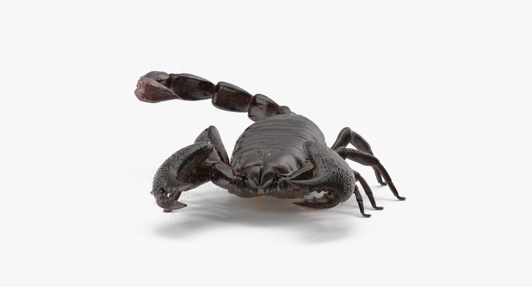 Scorpion - Standing - reel 1