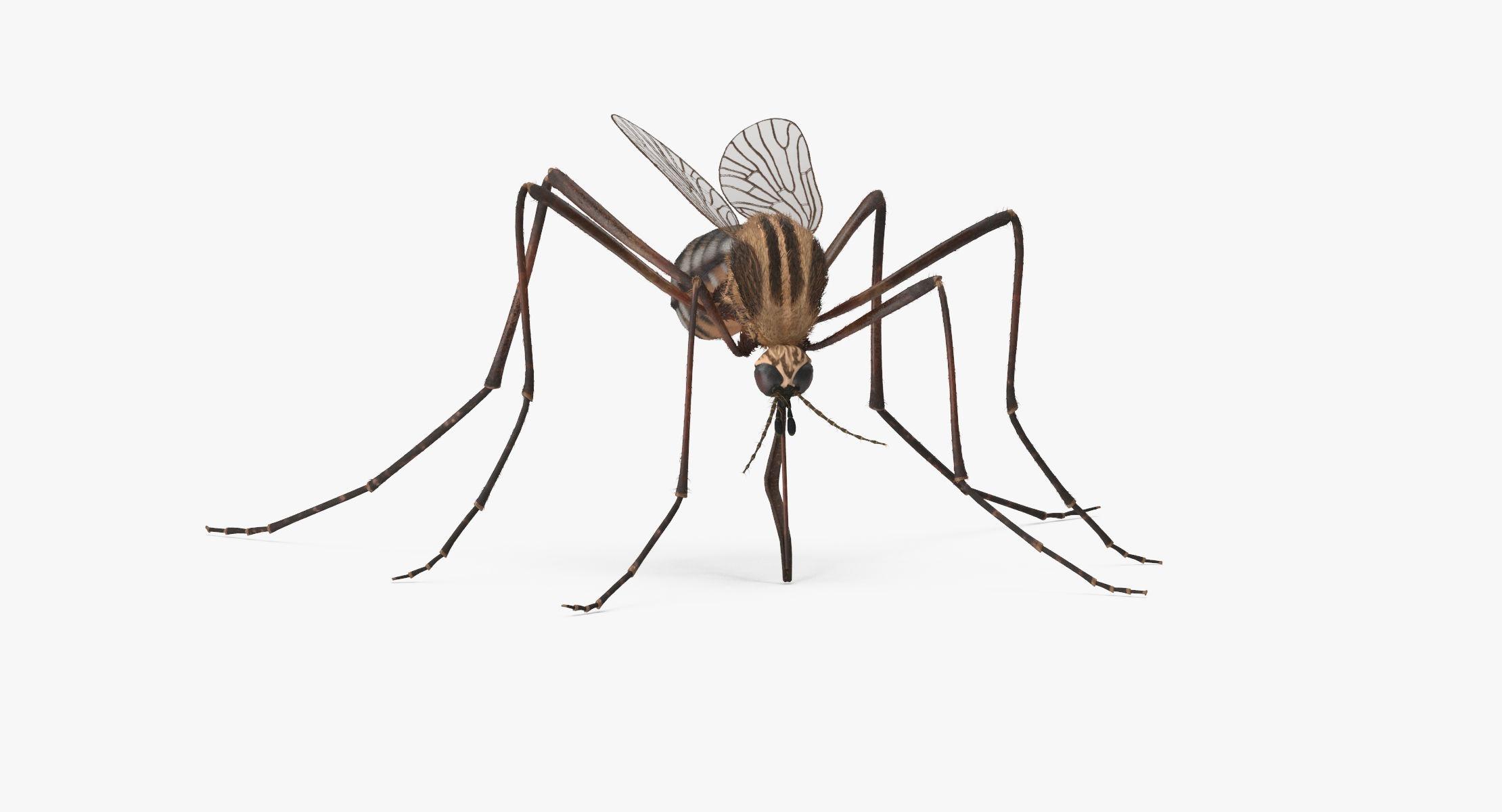 Mosquito Bloodsucking - reel 1