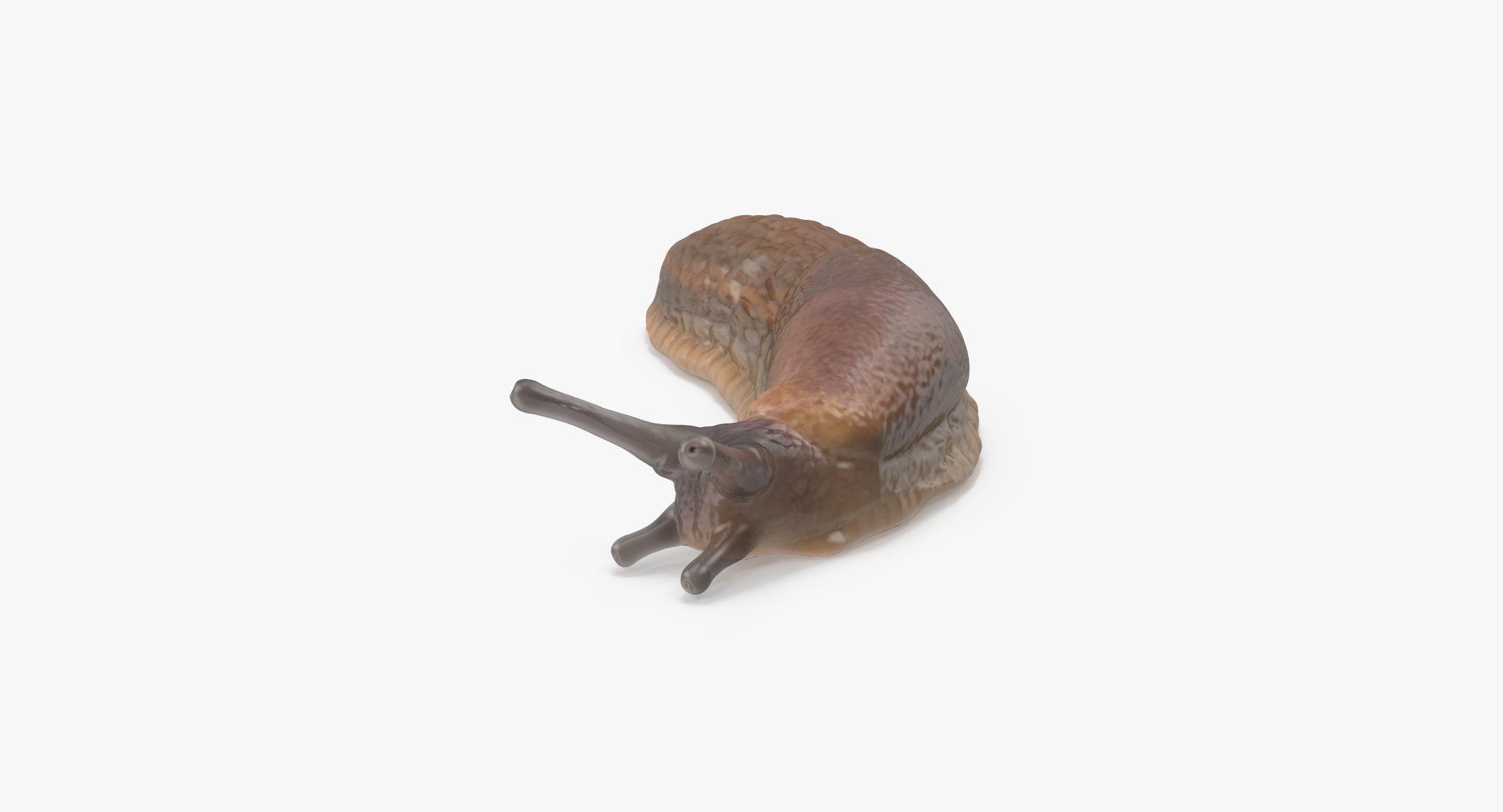 Slug 02 - reel 1