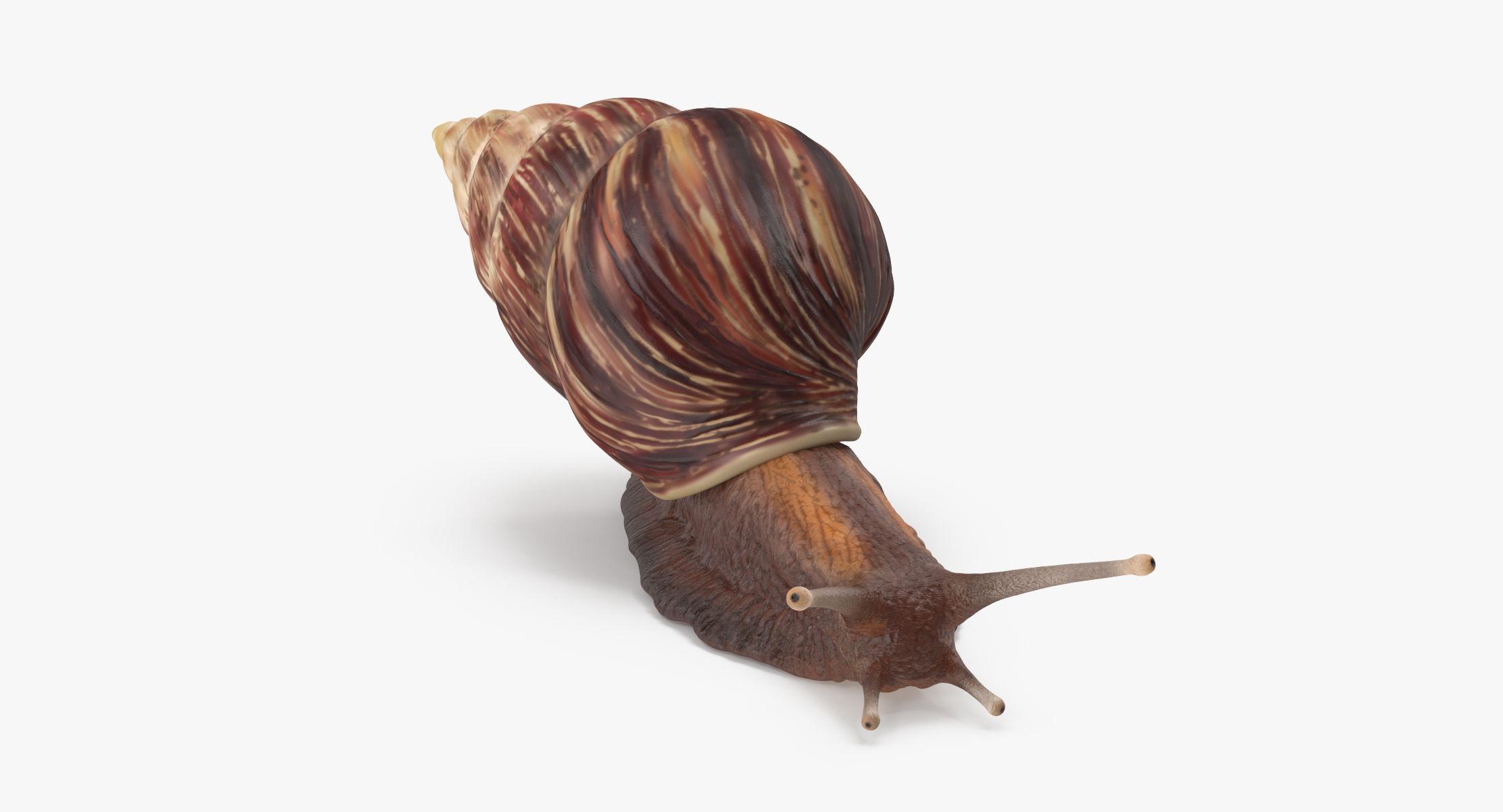 Grove snail 01 - reel 1