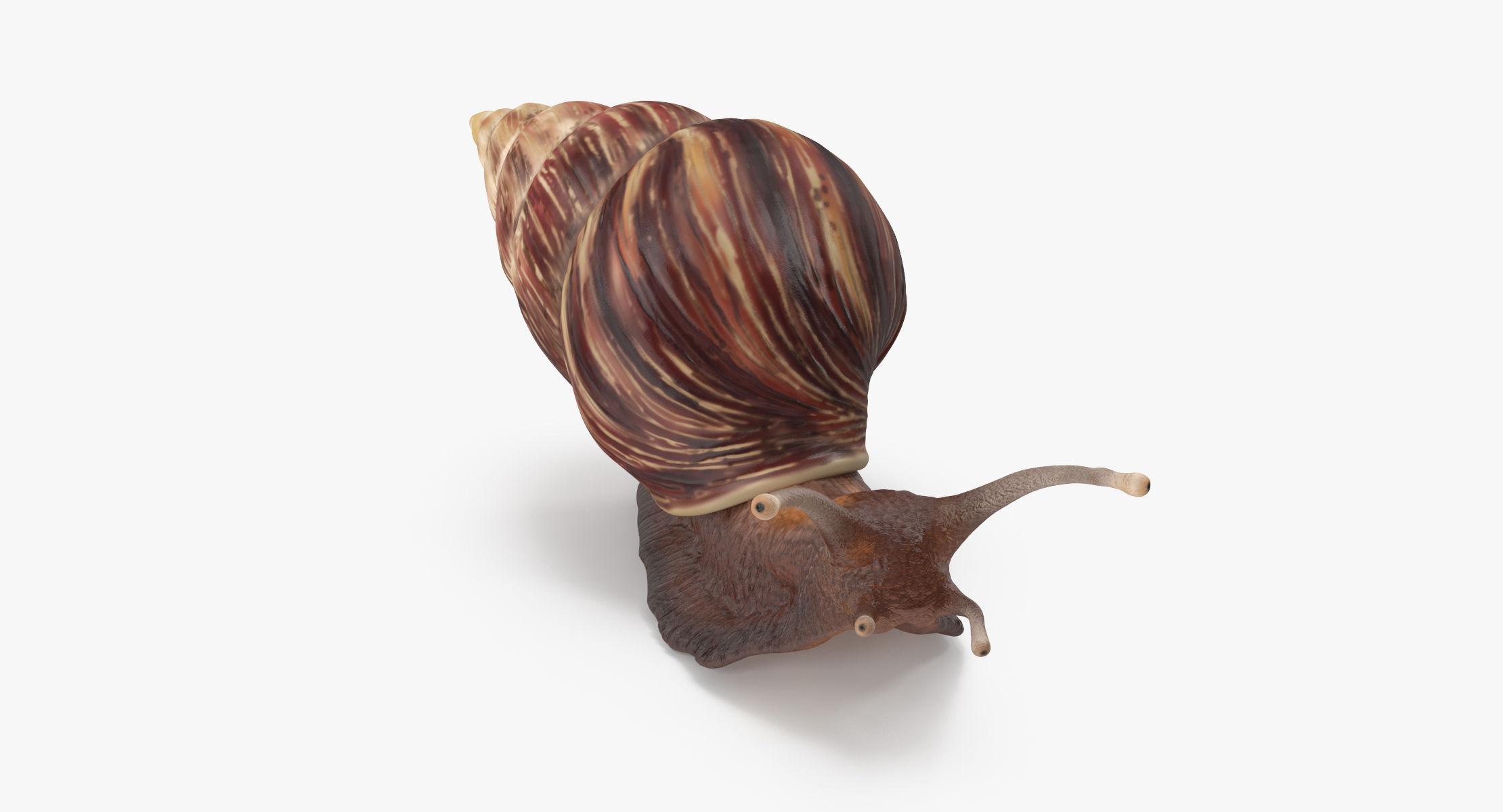 Grove snail 03 - reel 1