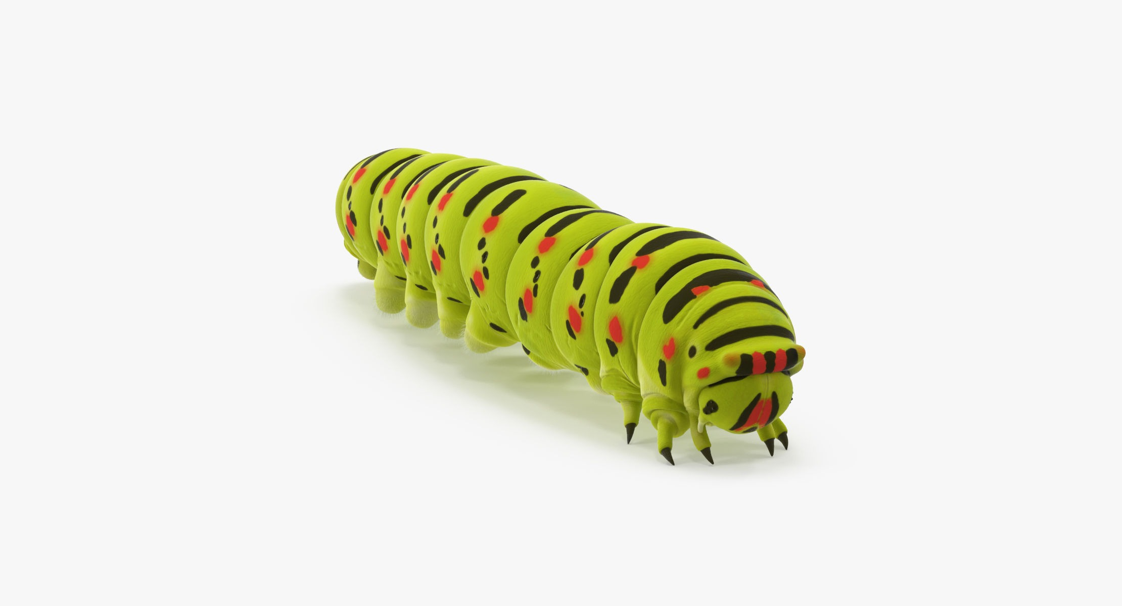 Caterpillar Walking - reel 1