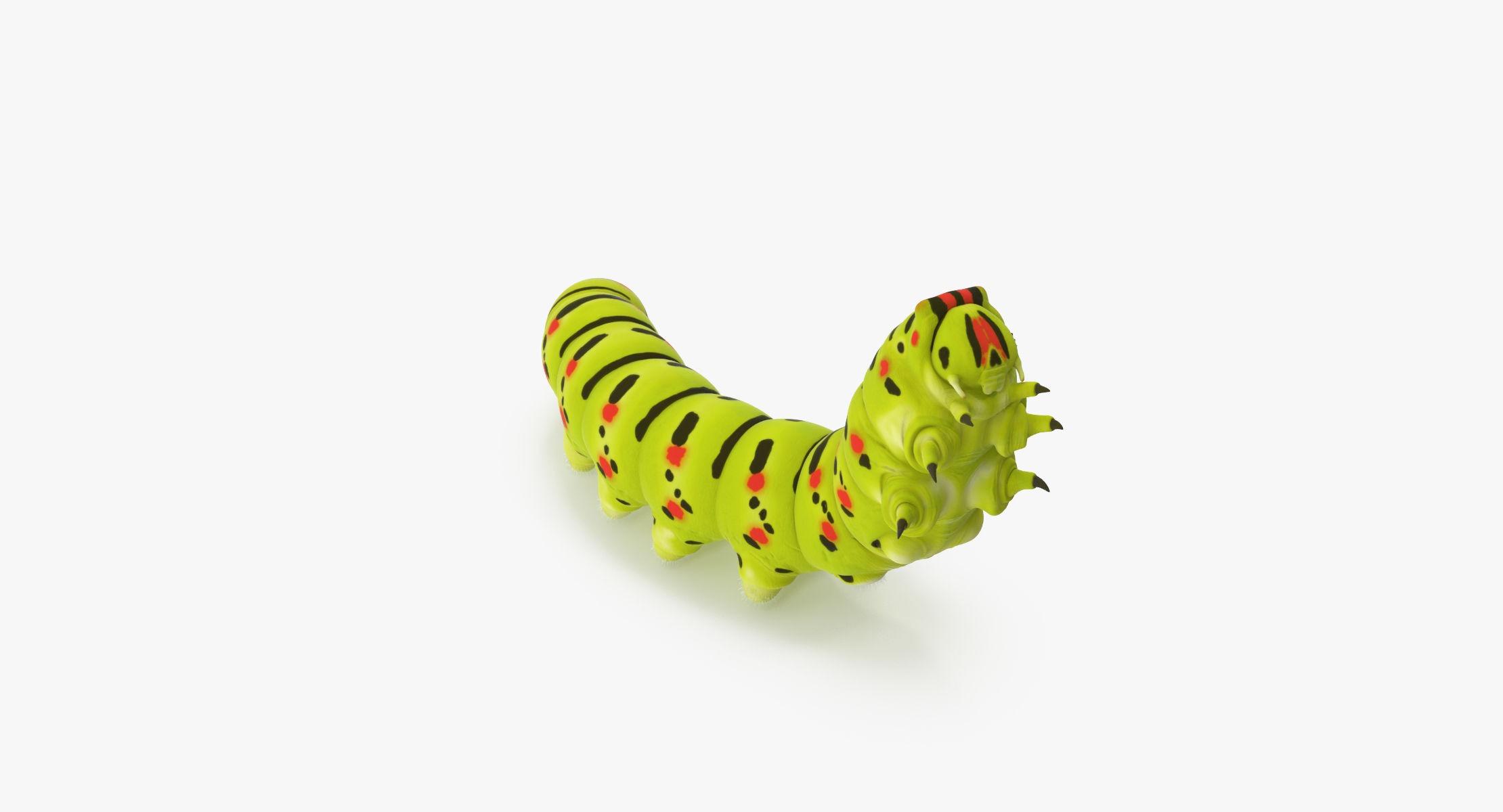 Caterpillar Climbing Up - reel 1