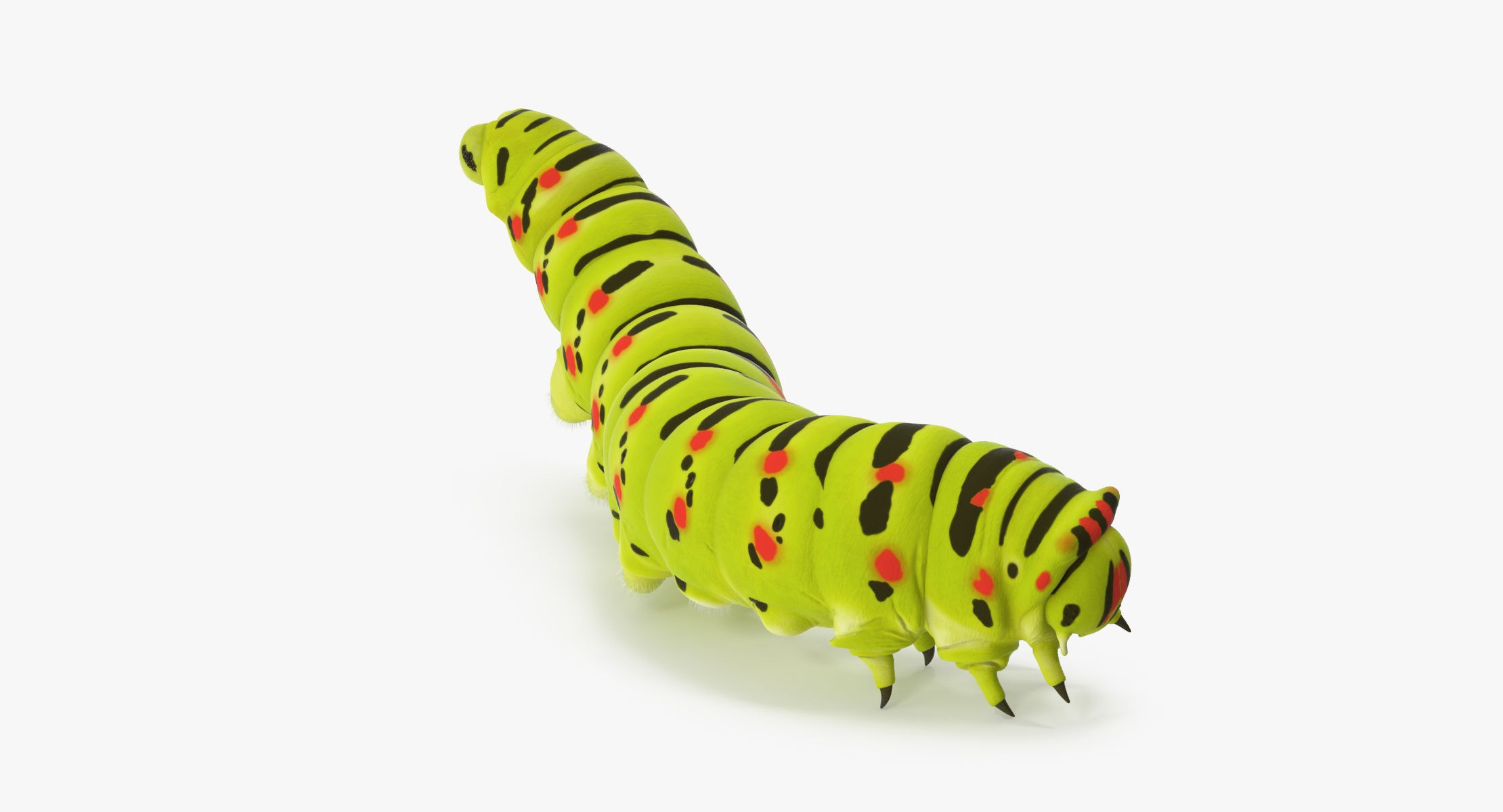 Caterpillar Climbing Down - reel 1