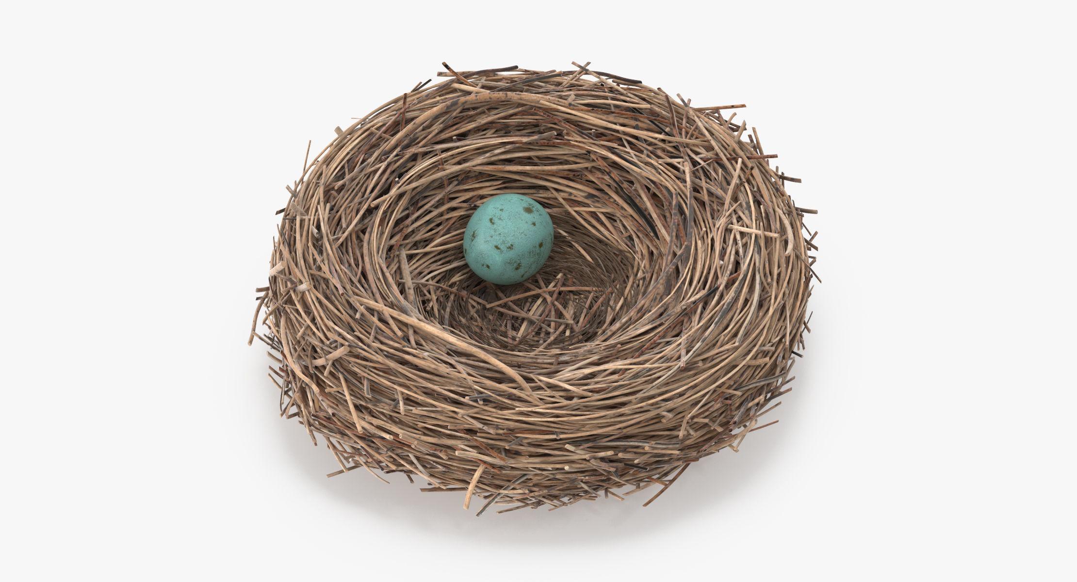 Bird Nest 03 - reel 1